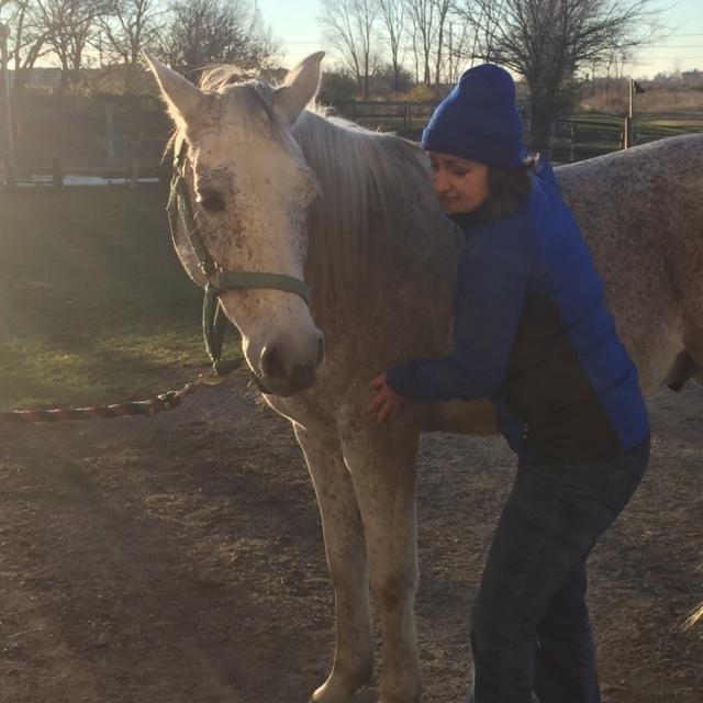 Bandito enjoying the benefits of bodywork during a demo at a local barn