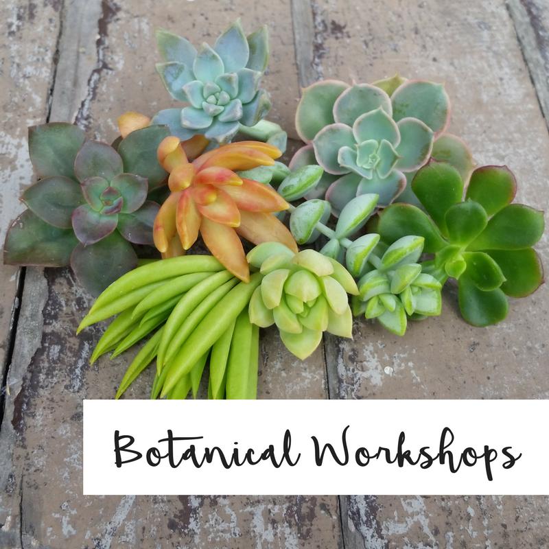 succulent workshops san francisco sonoma petaluma