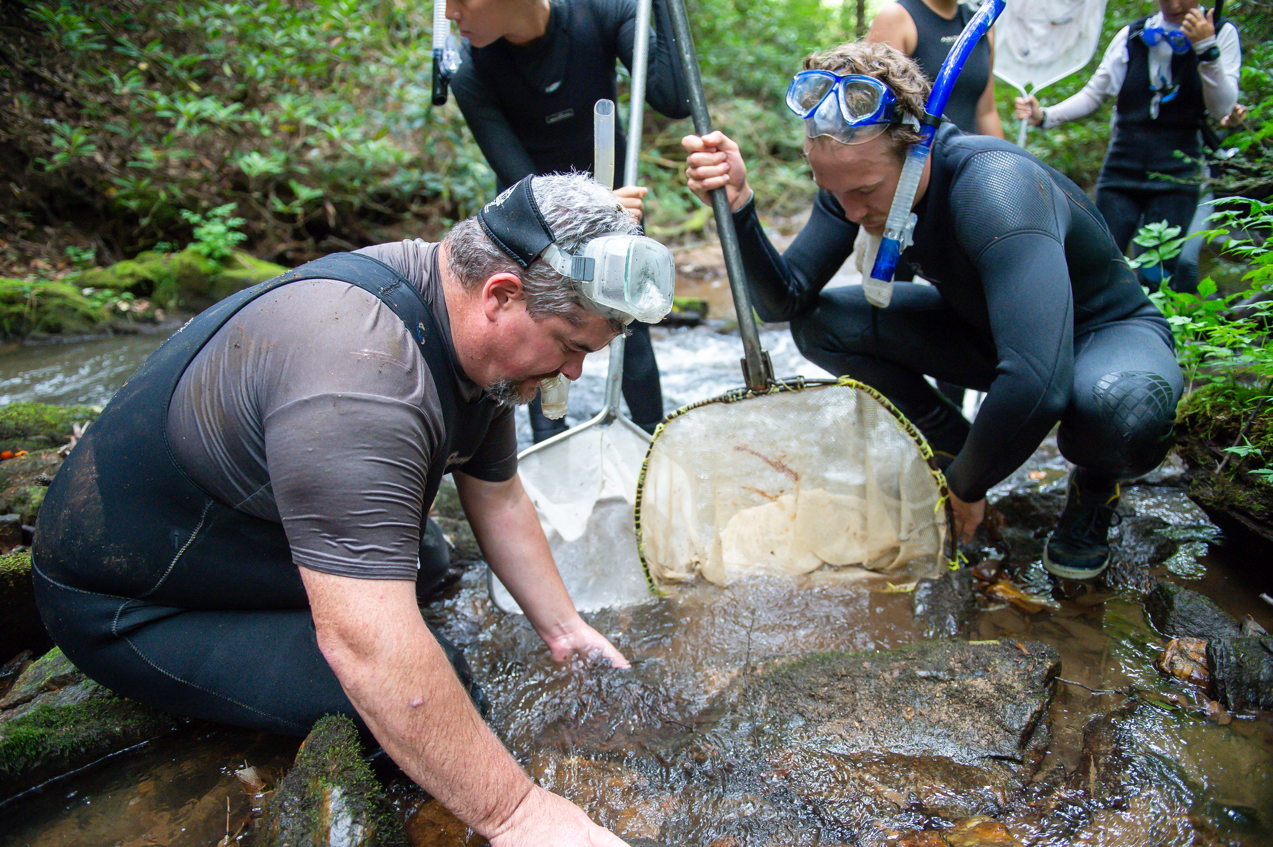 (From left) Georgia Department of Natural Resources wildlife biologist Thomas Floyd and Georgia Department of Transportation ecologist Nathan Polley prepare to lift a rock in hopes of netting a hellbender during a scheduled survey of the Eastern hellbender in the Chattahoochee National Forest in North Georgia Friday, Aug. 31, 2018.