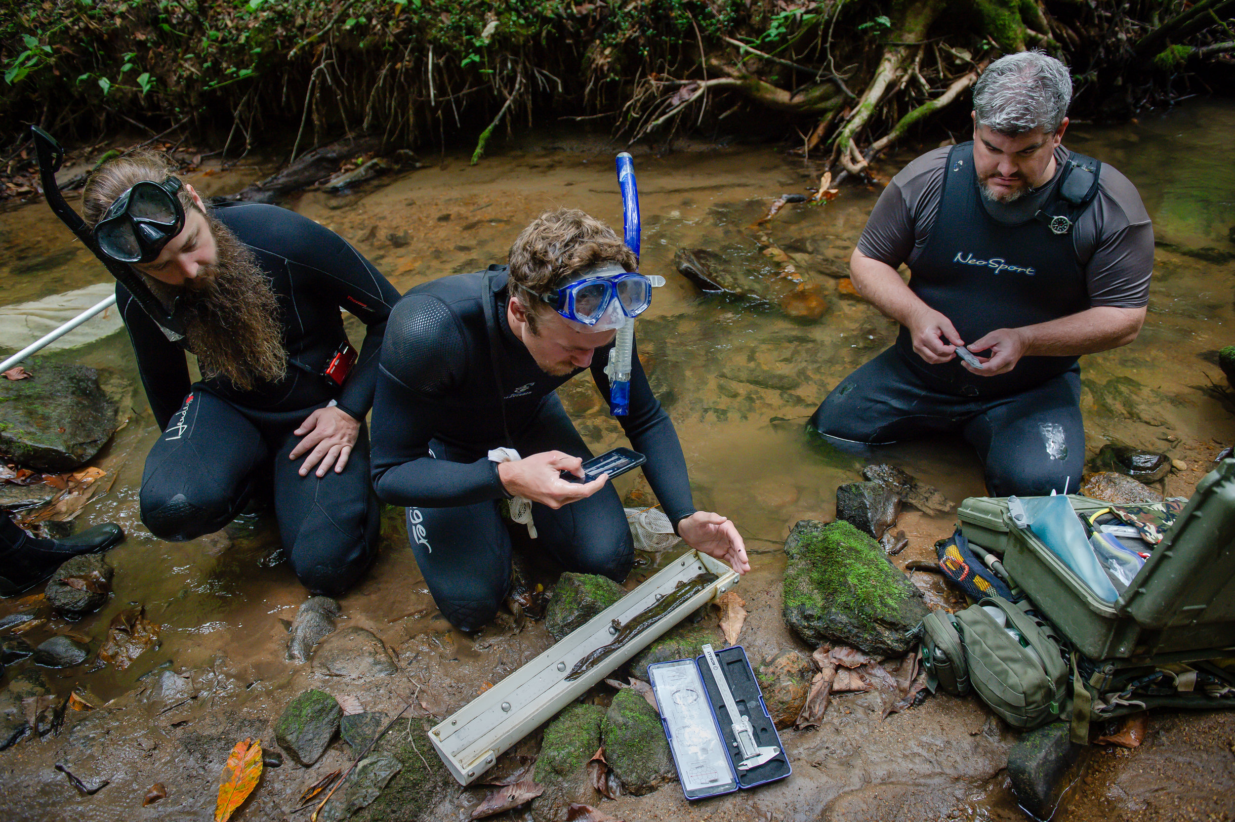 (From left) Georgia Department of Transportation ecologists (from left) Ryan Niccoli and Nathan Polley, and Georgia Department of Natural Resources wildlife biologist Thomas Floyd, measure and tag an Eastern hellbender during a scheduled survey of Eastern hellbenders in the Chattahoochee National Forest in North Georgia Friday, Aug. 31, 2018.