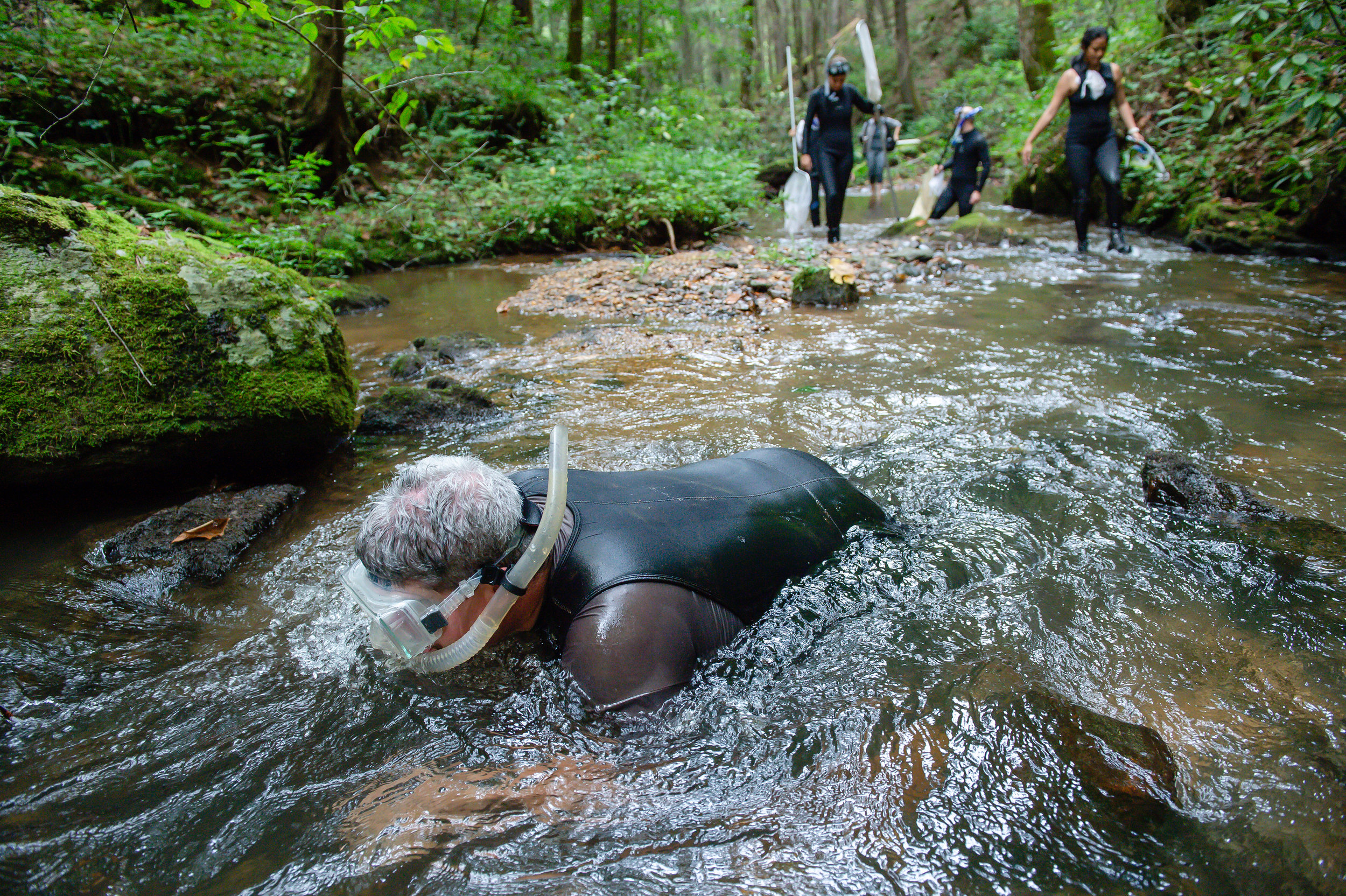 Georgia Department of Natural Resources wildlife biologist Thomas Floyd (foreground) and other biologists and ecologists participate in a scheduled survey of the Eastern hellbender in the Chattahoochee National Forest in North Georgia Friday, Aug. 31, 2018.
