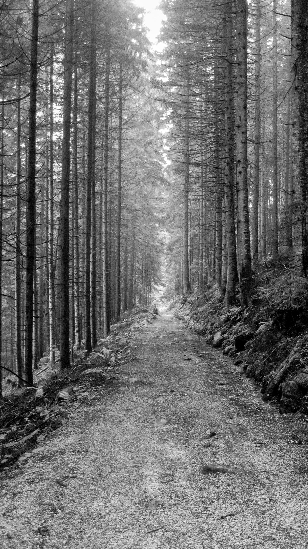 long path in alpine woods.jpeg
