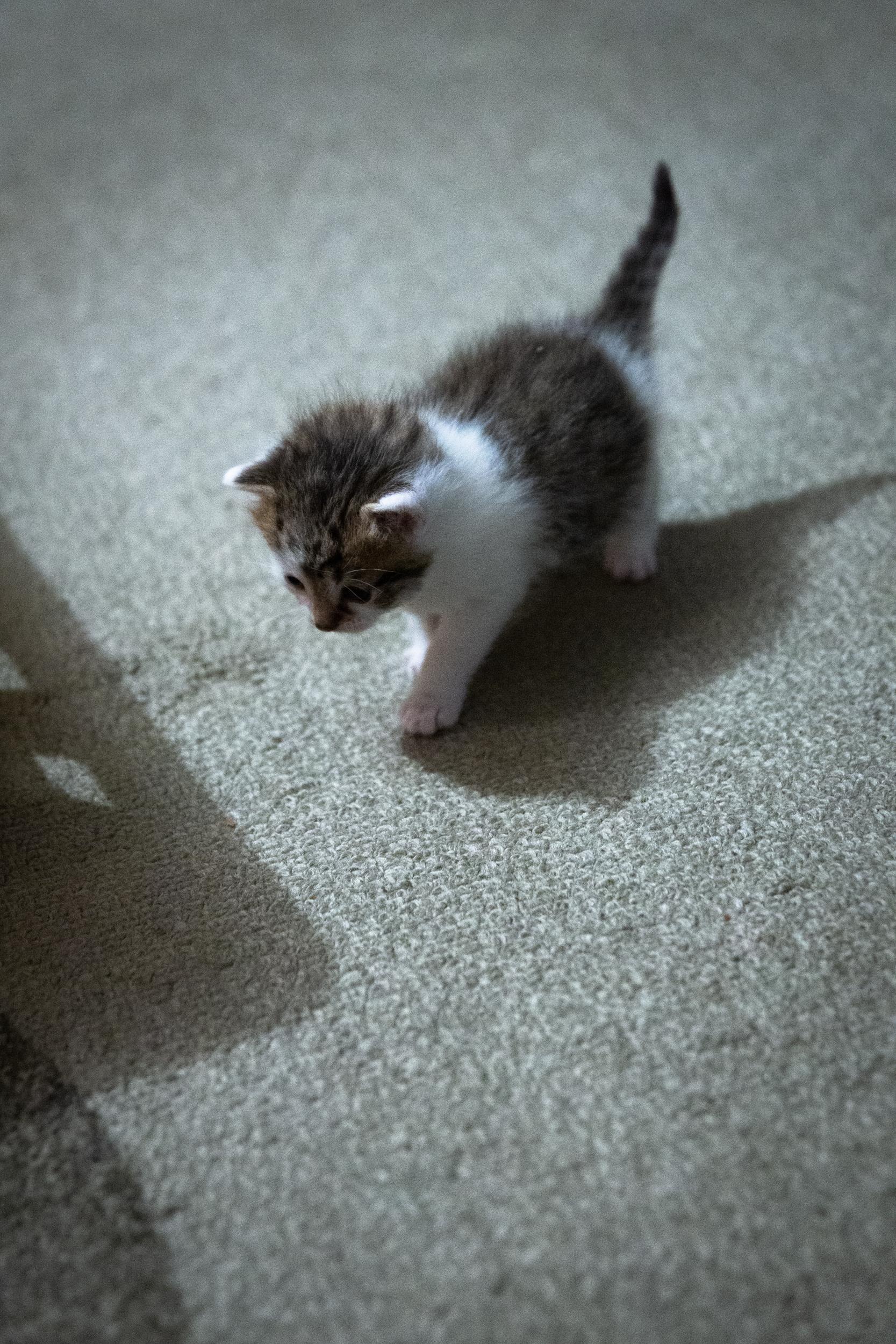 kittens 19_01.jpg