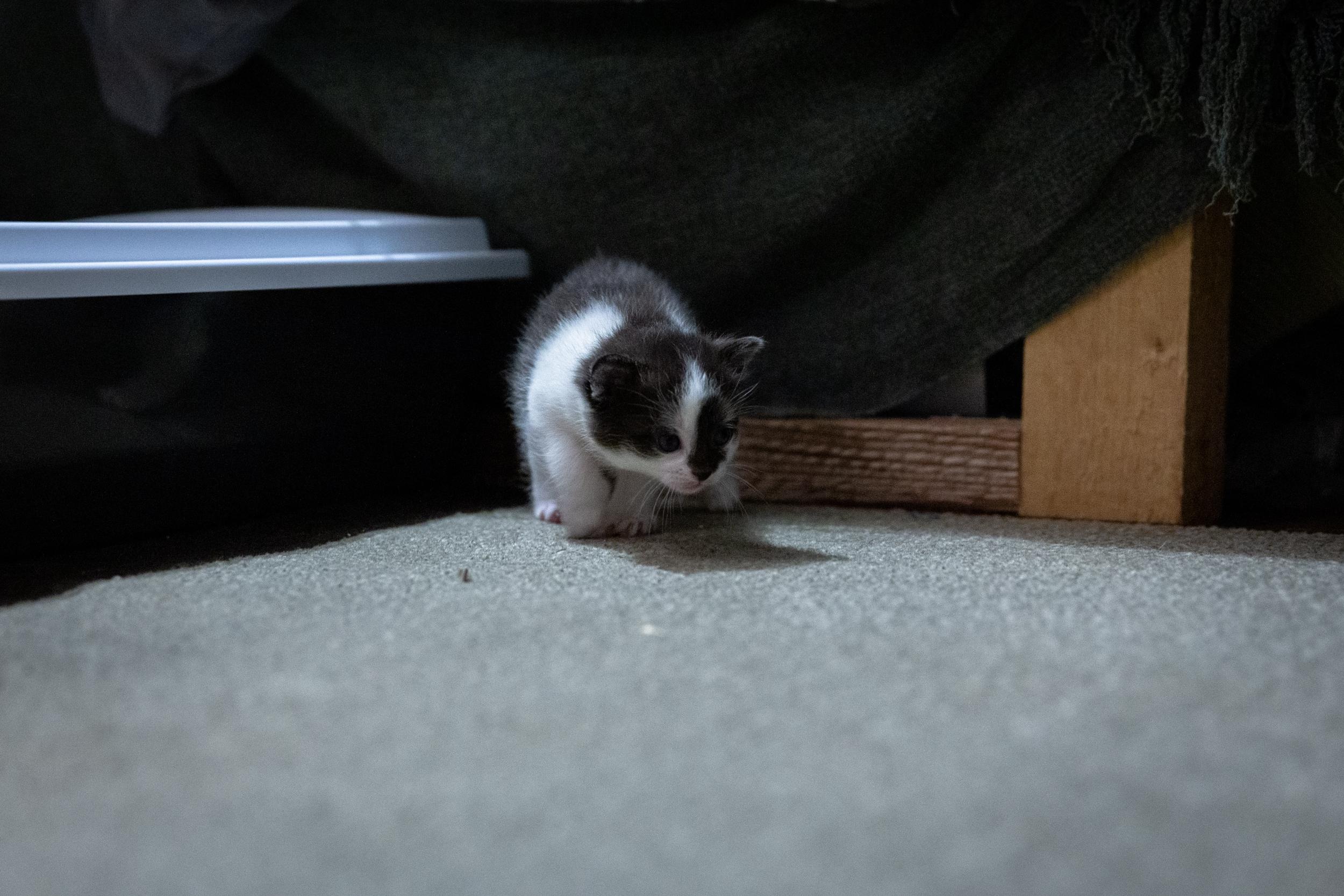 kittens 19_04.jpg