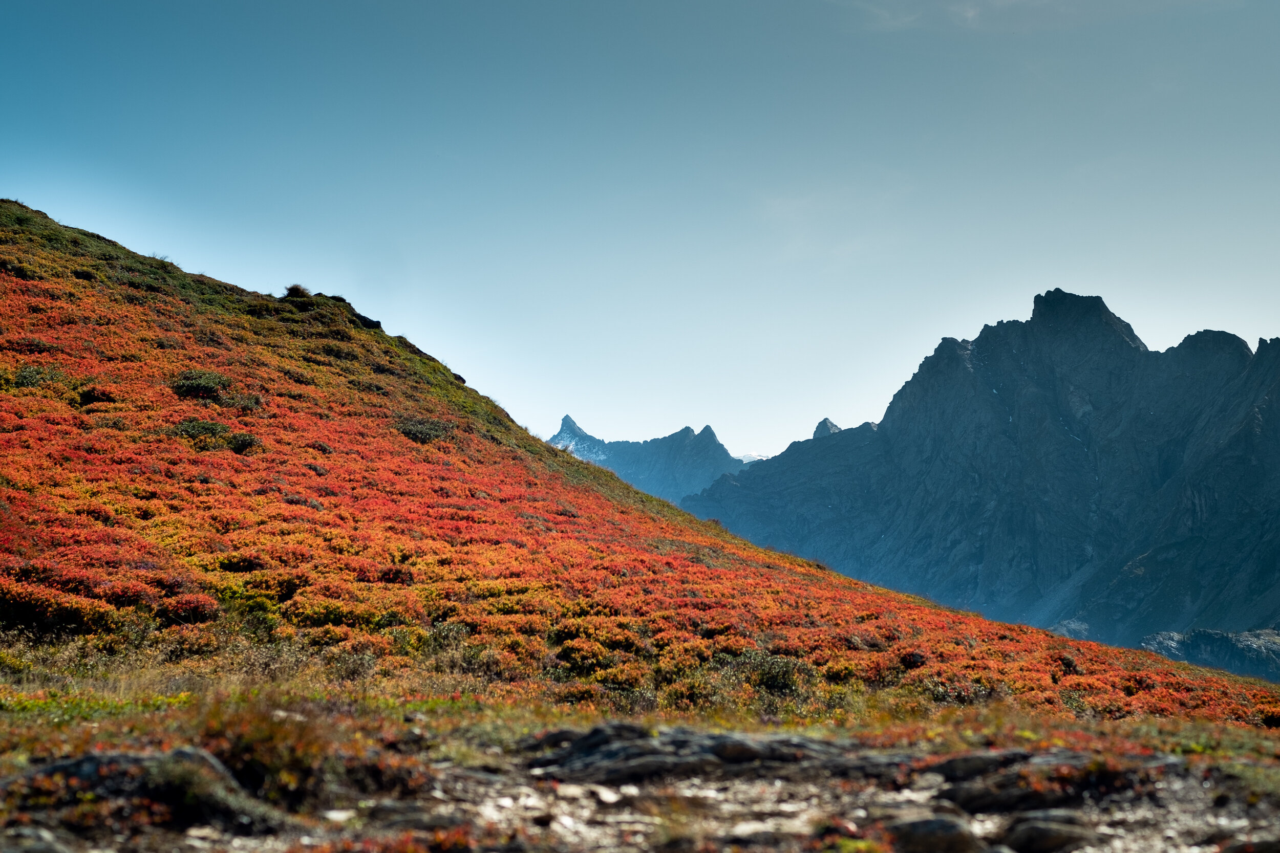 autumn ahorn 19_07.jpg
