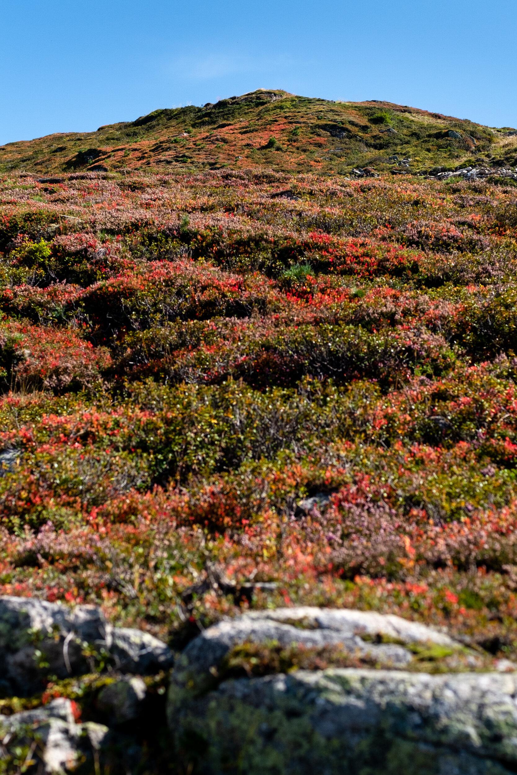 autumn ahorn 19_05.jpg
