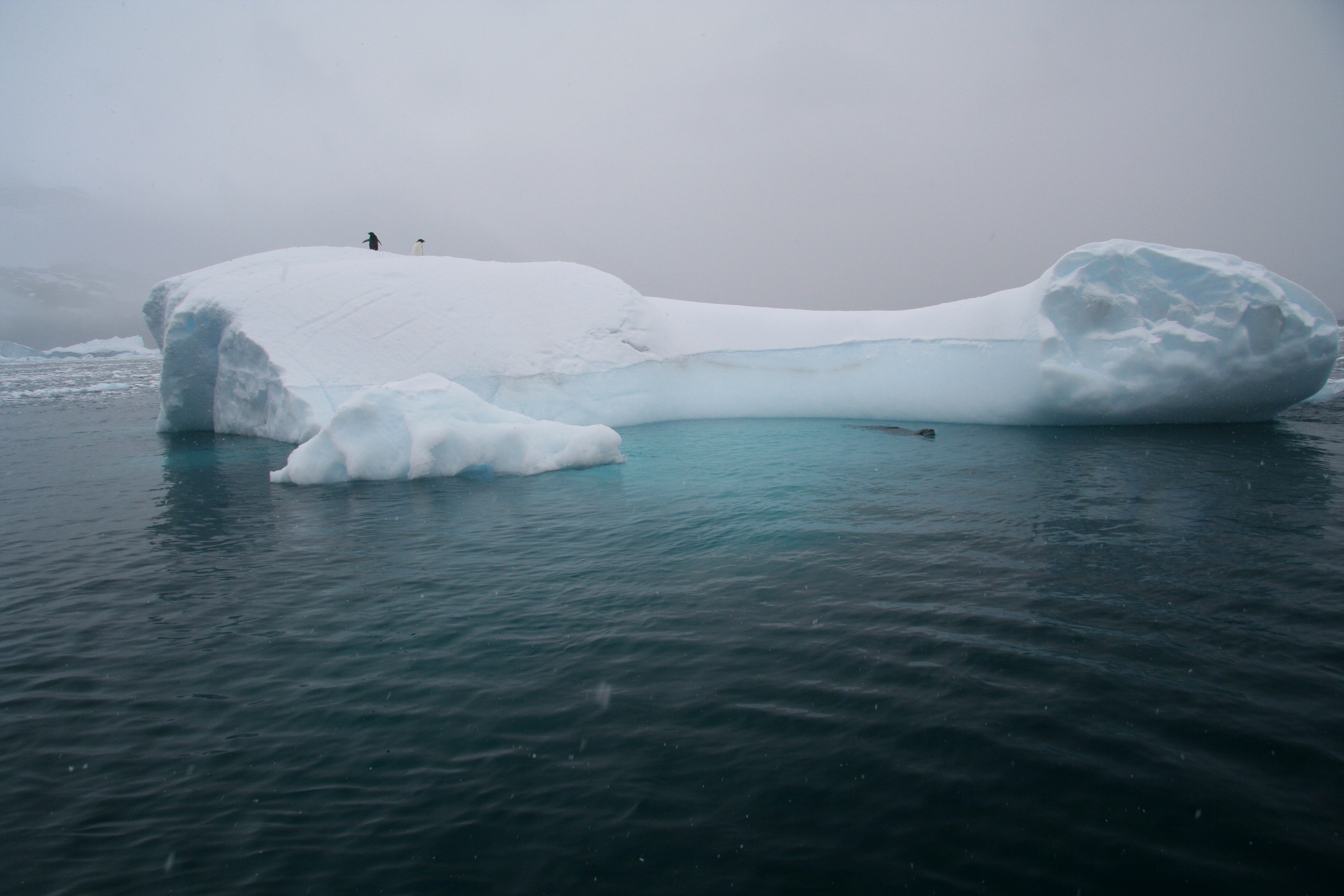 Two penguins on top of an iceberg, waiting for a killer seal to lose interest