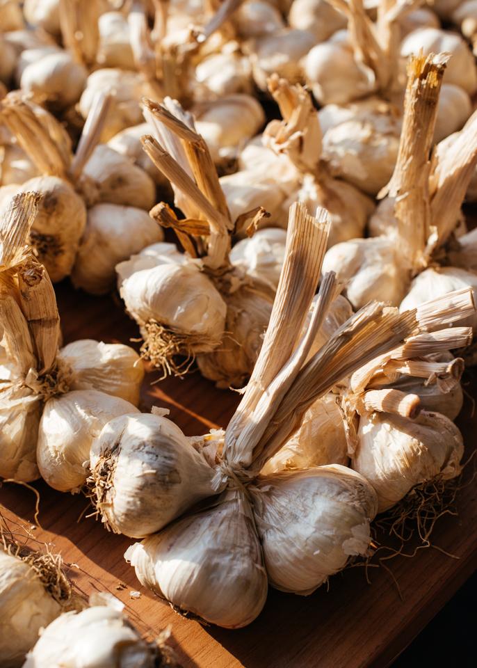 Fresh garlic in the morning light.
