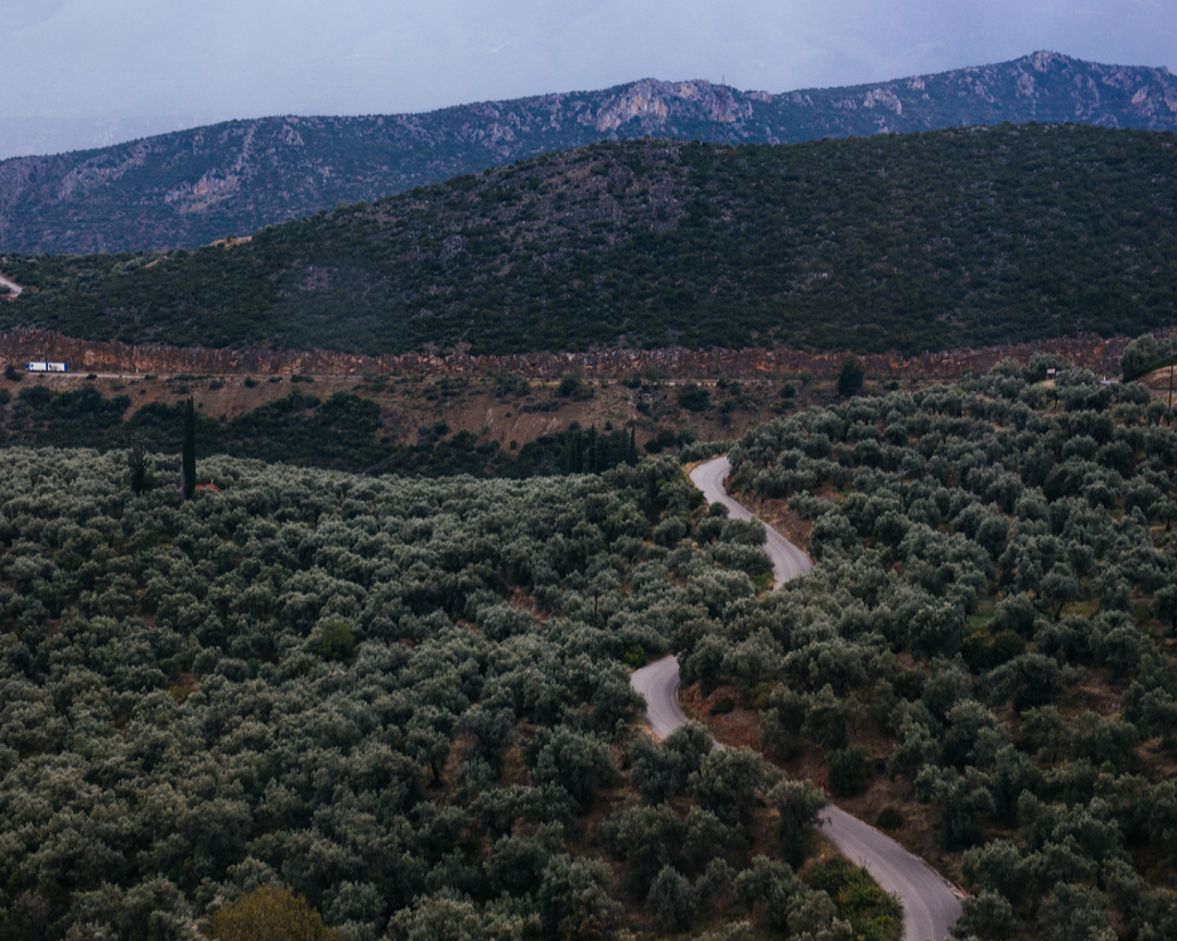 The road toward Meteora winds through the olive groves.