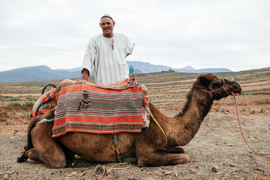 Camel guide.