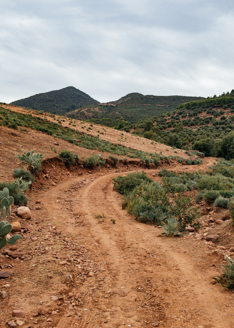 Red clay soil and cactuses where the landscape of this area.