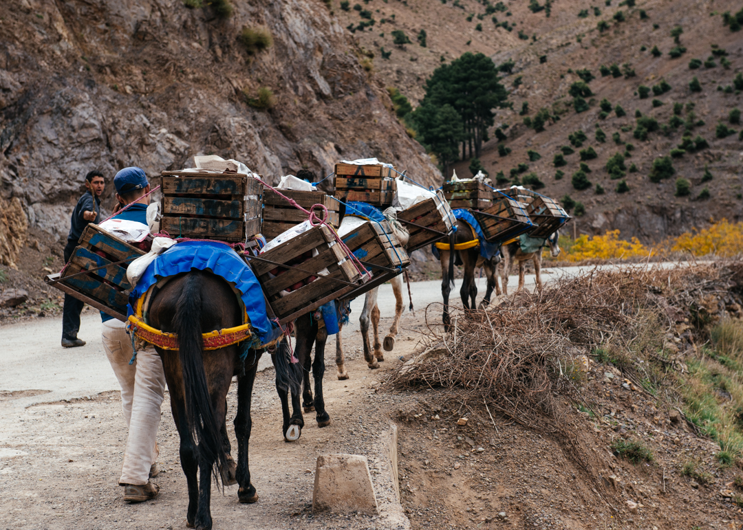 Berber farmers carry their supplies on horses and donkeys.