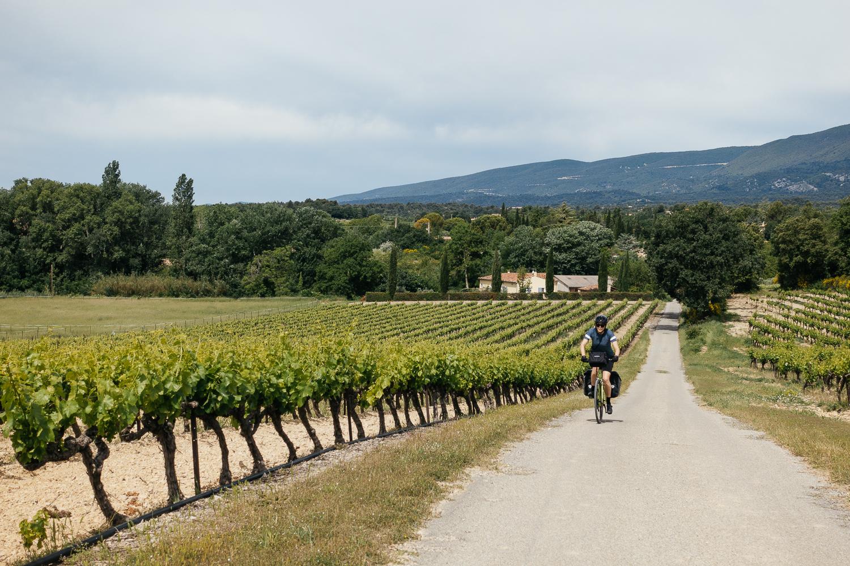 Vineyards cover the Luberon Valley as we bike towards Vitrolles-en Luberon.