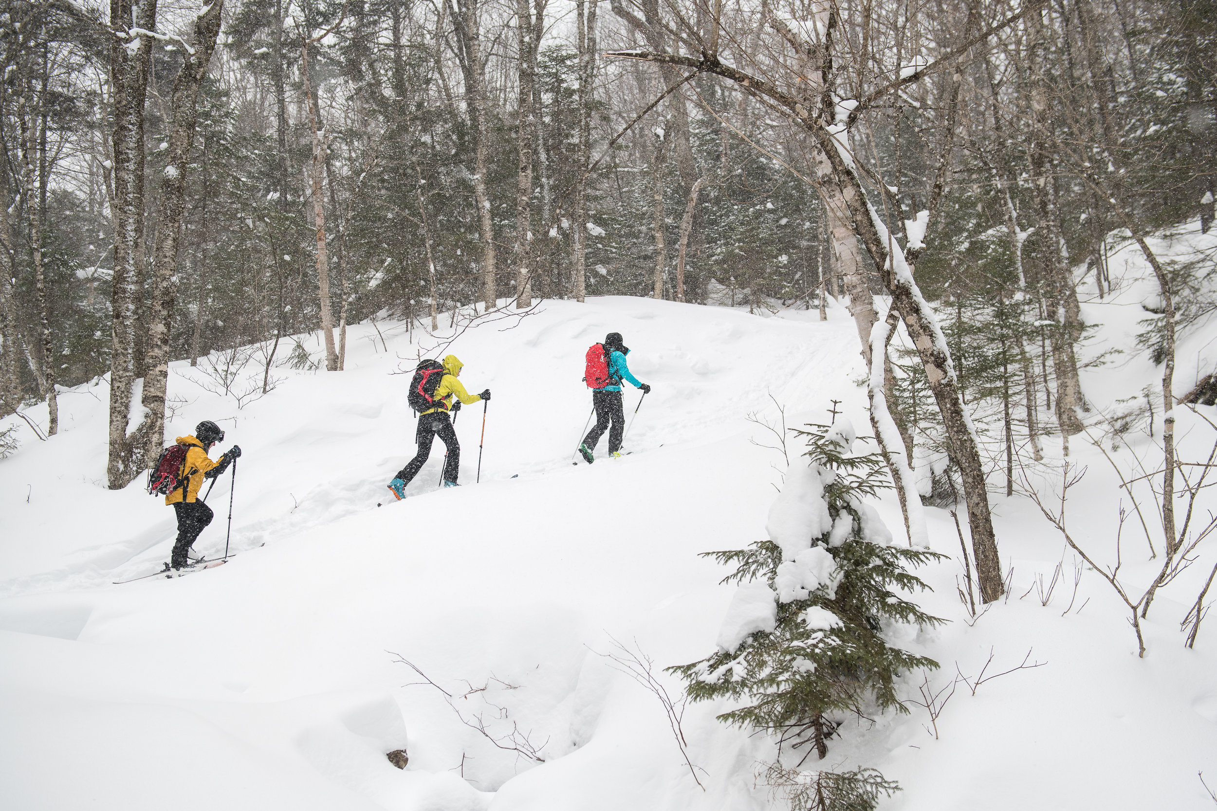 Skinning up the Gulf of Slides trail.