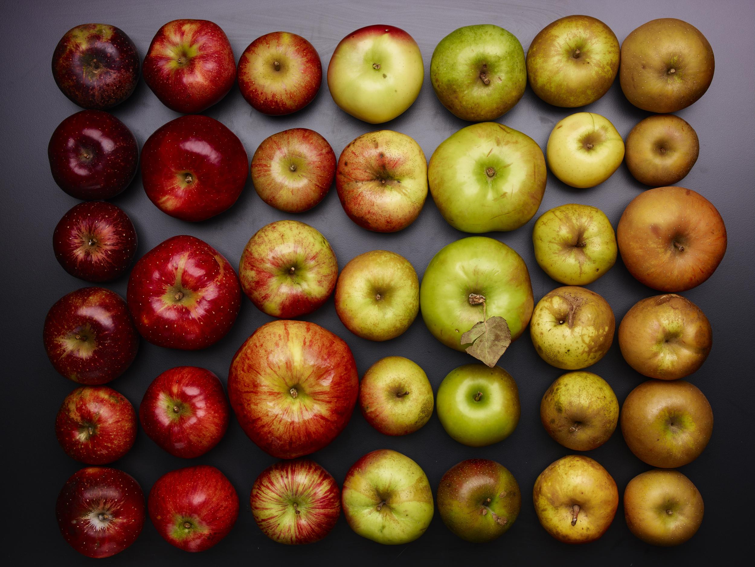 Apples15587.jpg