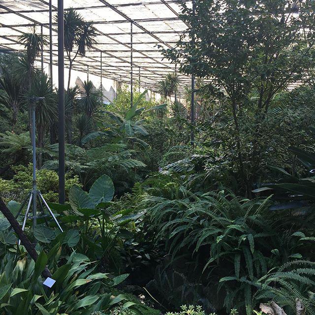 Botanical garden in Lisbon. FANTASTIC!!!