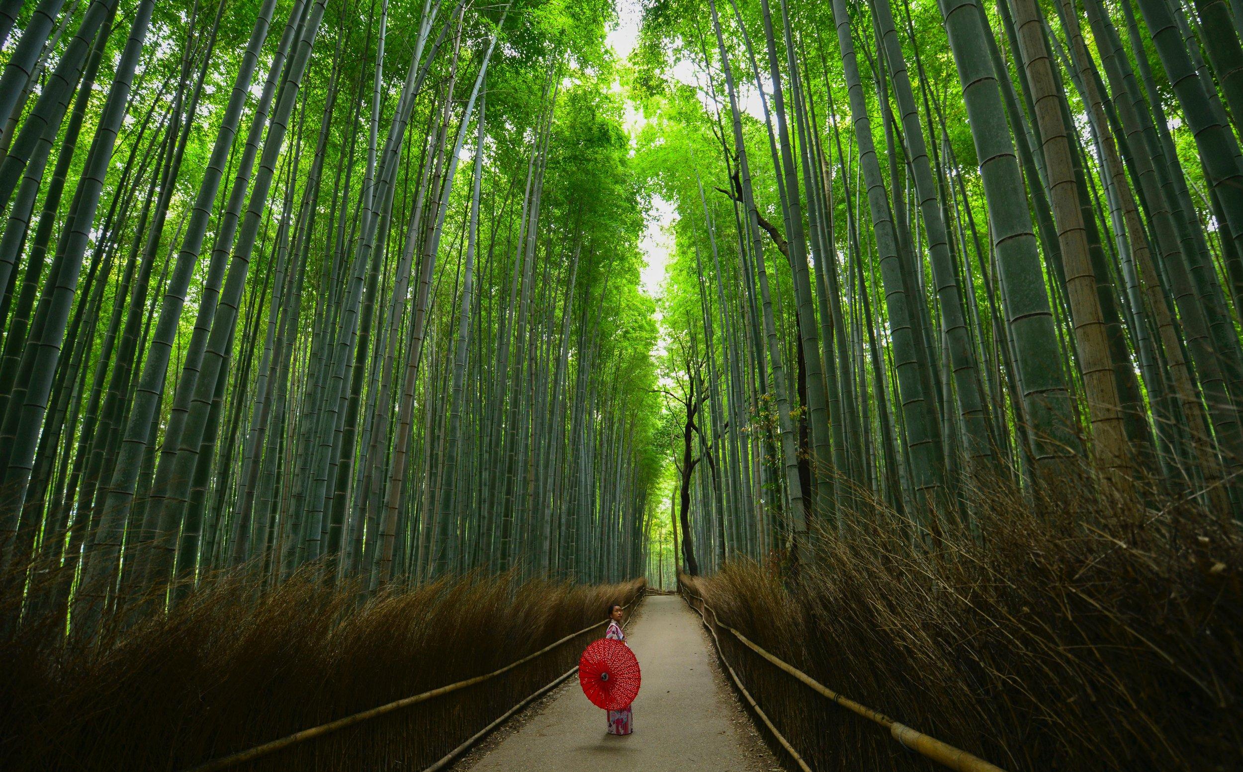 Opplev Japan -