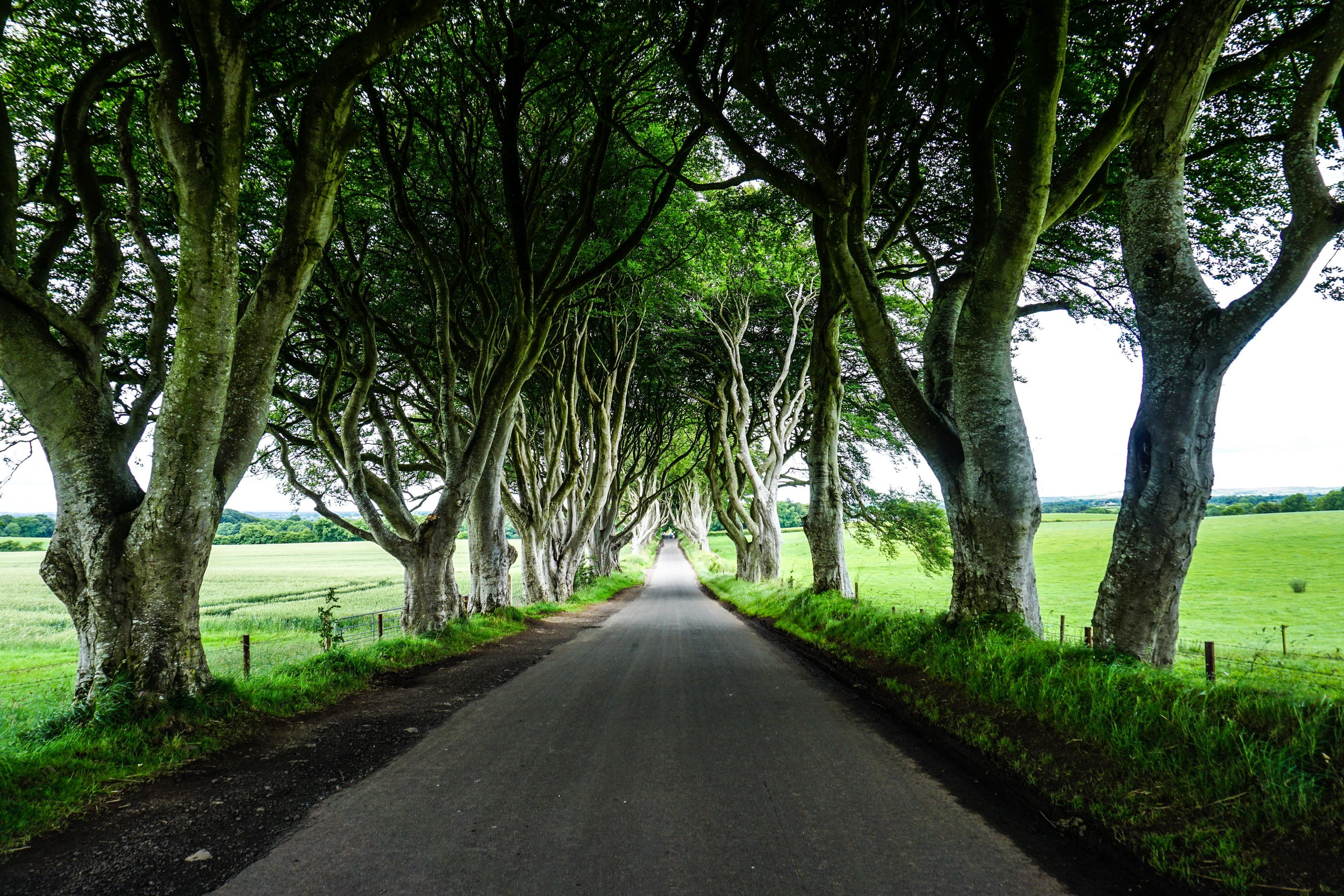 King's Road (actually the Dark Hedges, but shhh)