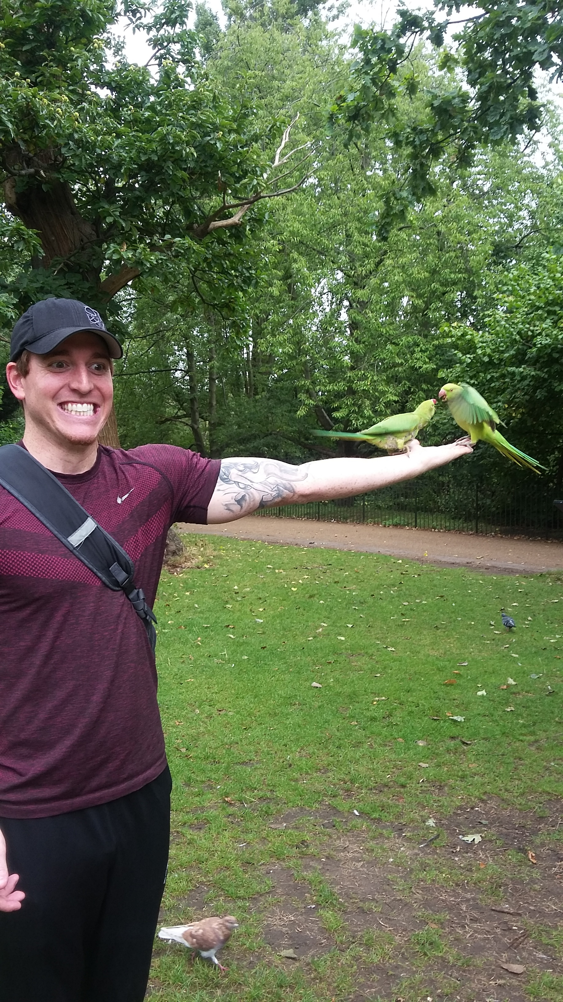 There were trees full of parakeets in the Kensington Gardens