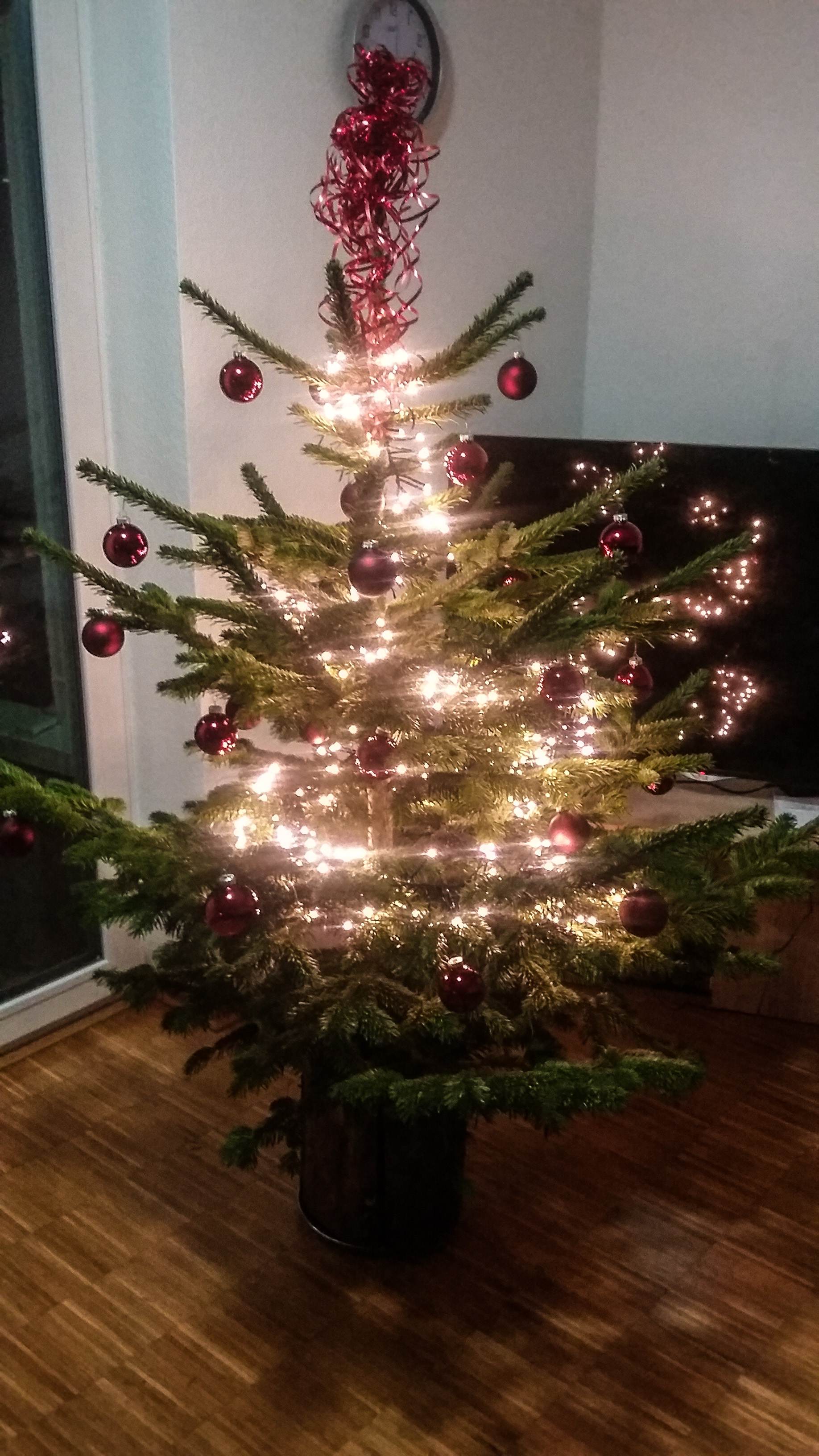 Our first real Christmas tree!