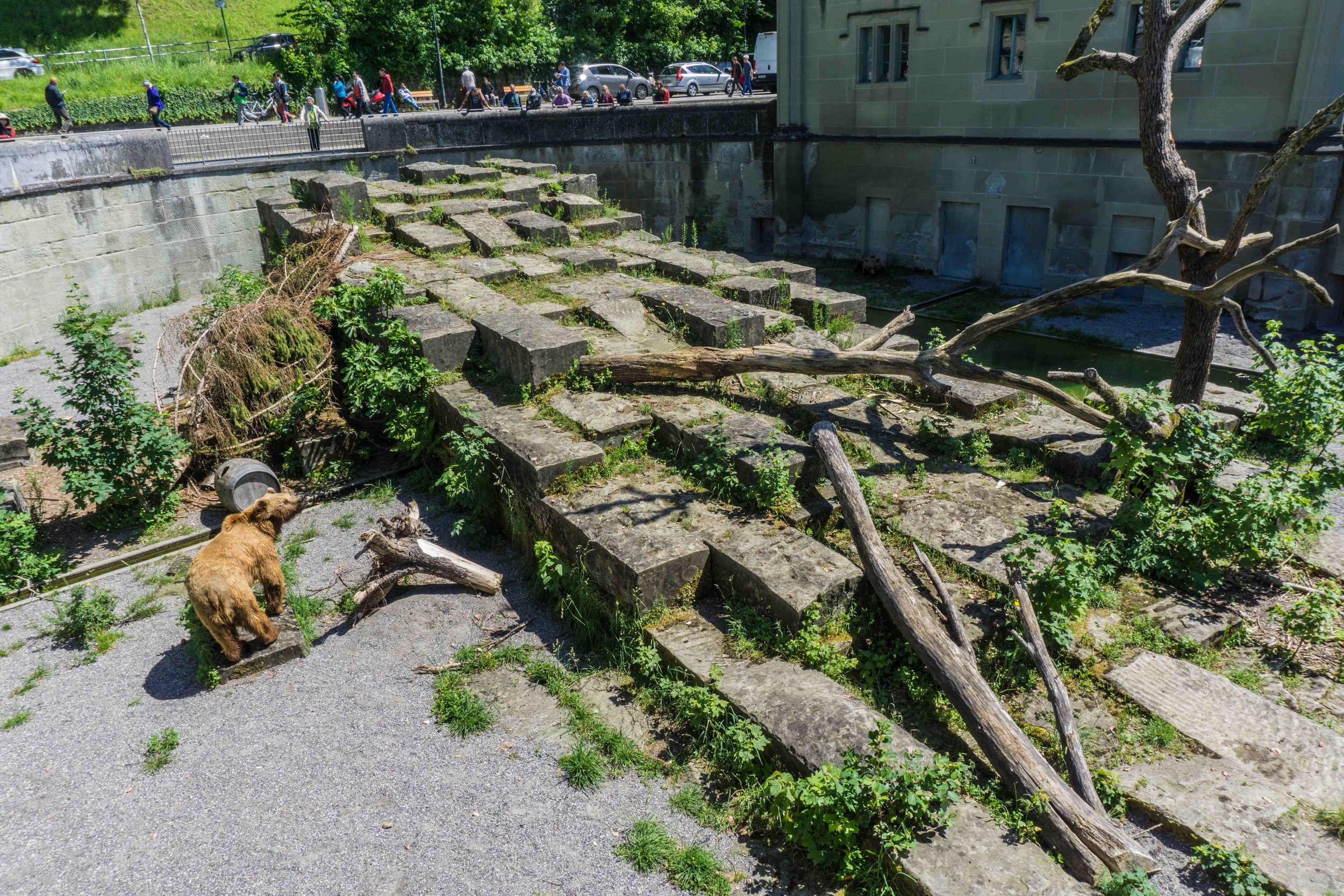 They always have a bear habitat in Bern - this is crazy! They're always there, even at night.