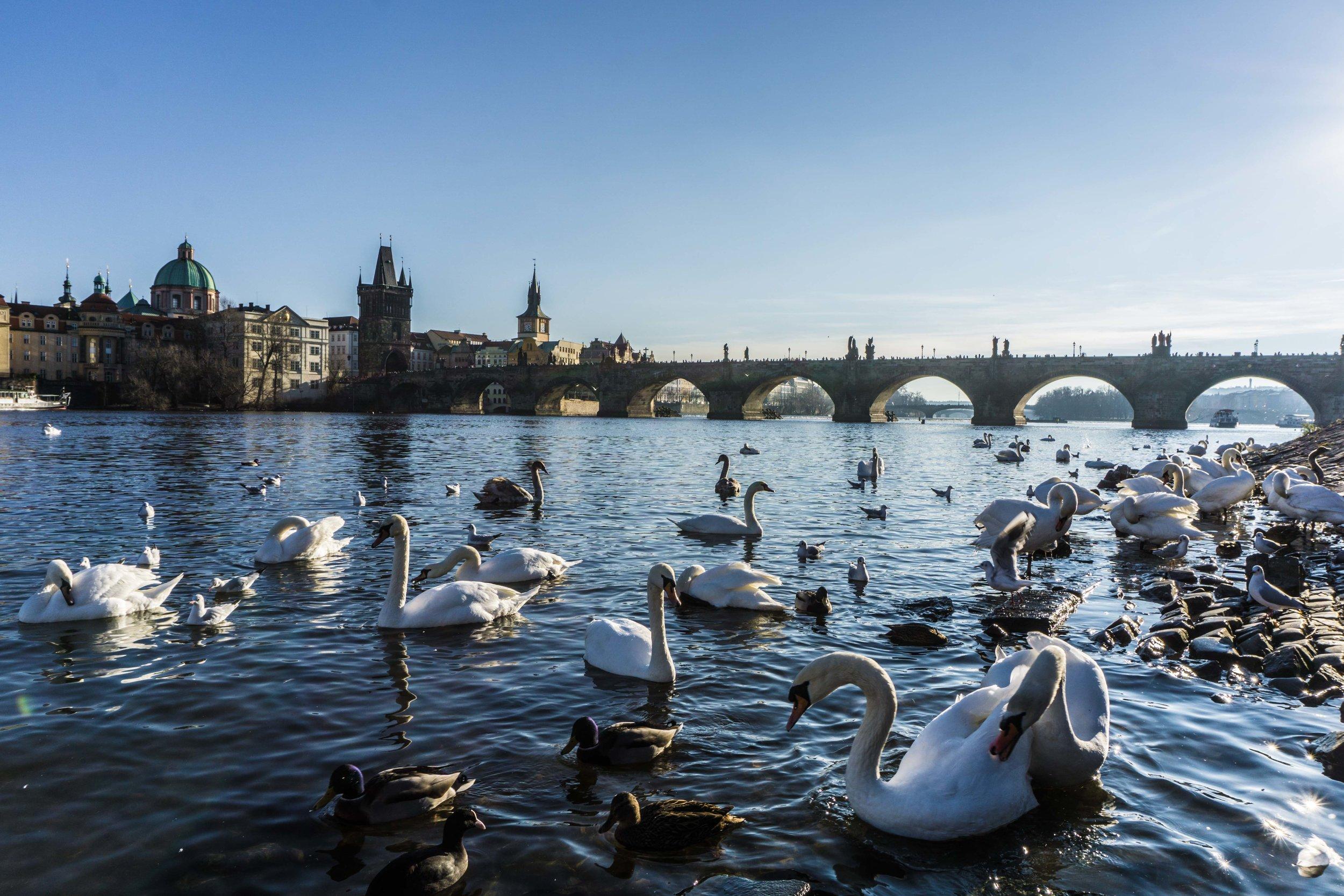 Prague-05290.jpg