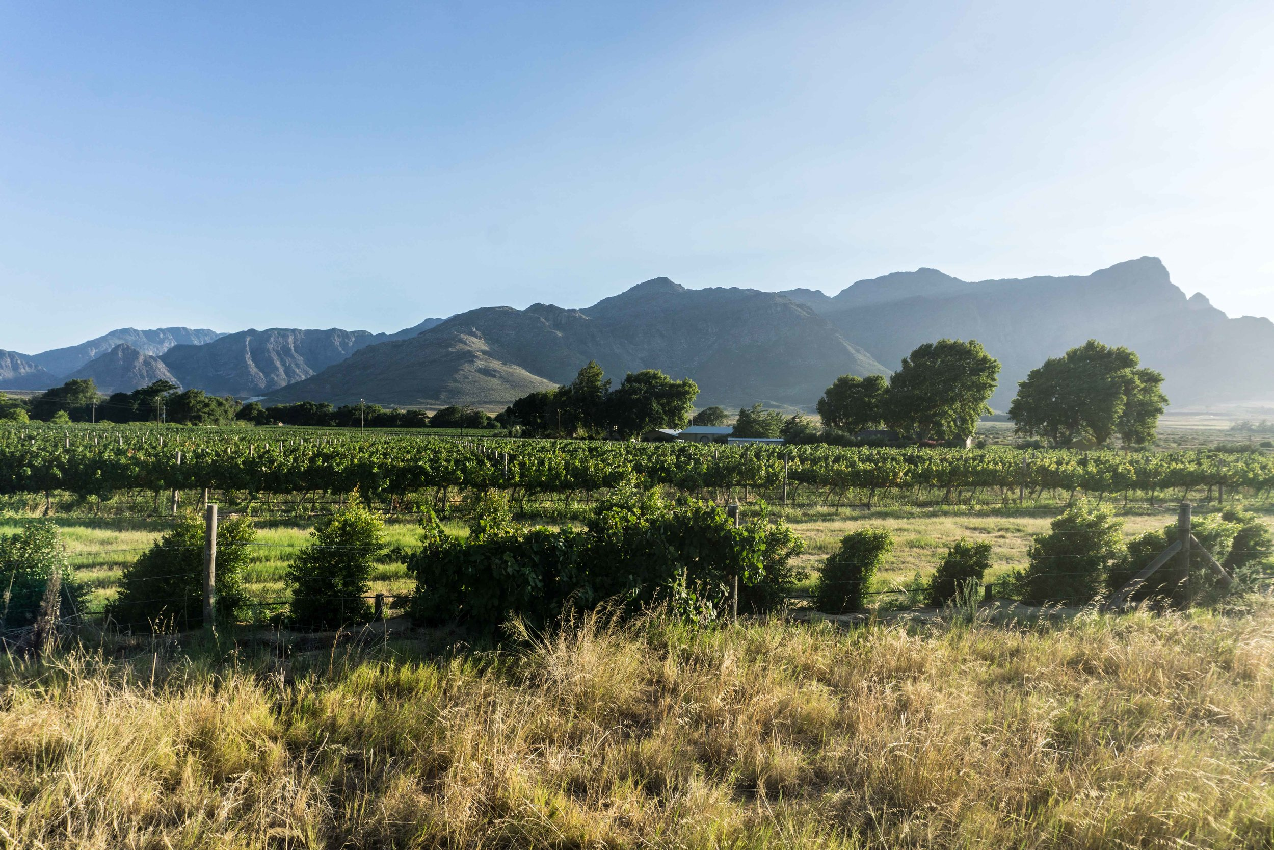 South-Africa-06705.jpg