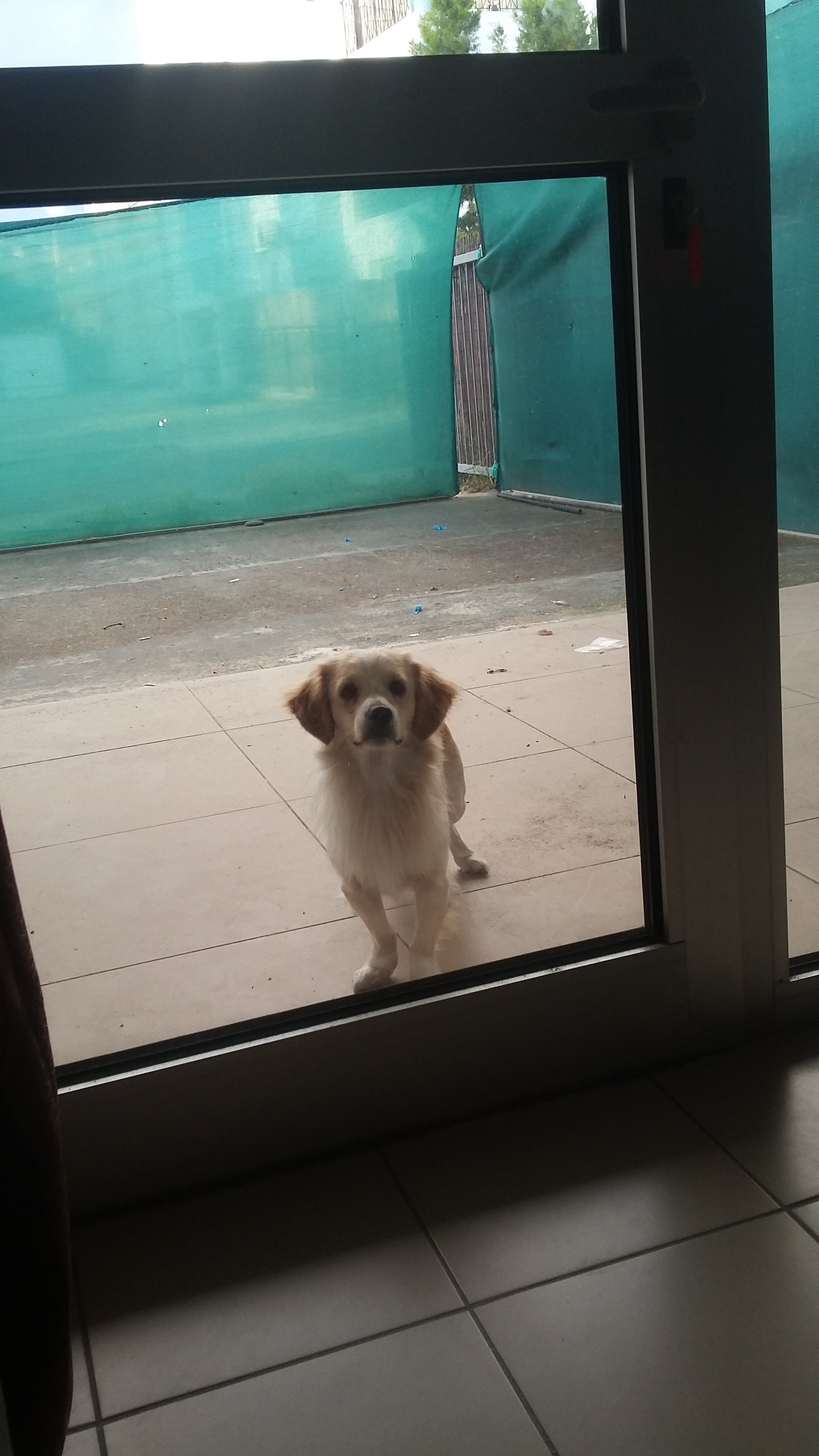 This sweet little pup would come up to our window every day, stare at us for a little while then walk off :'(
