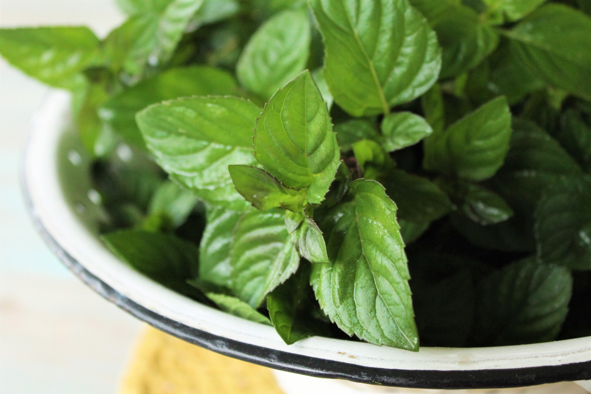 Fresh mint is packed with flavor and grows abundantly in our garden!