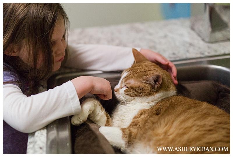 Lynchburg Humane Society || Lynchburg Wedding and Portrait Photographer || Ashley Eiban Photography || www.ashleyeiban.com