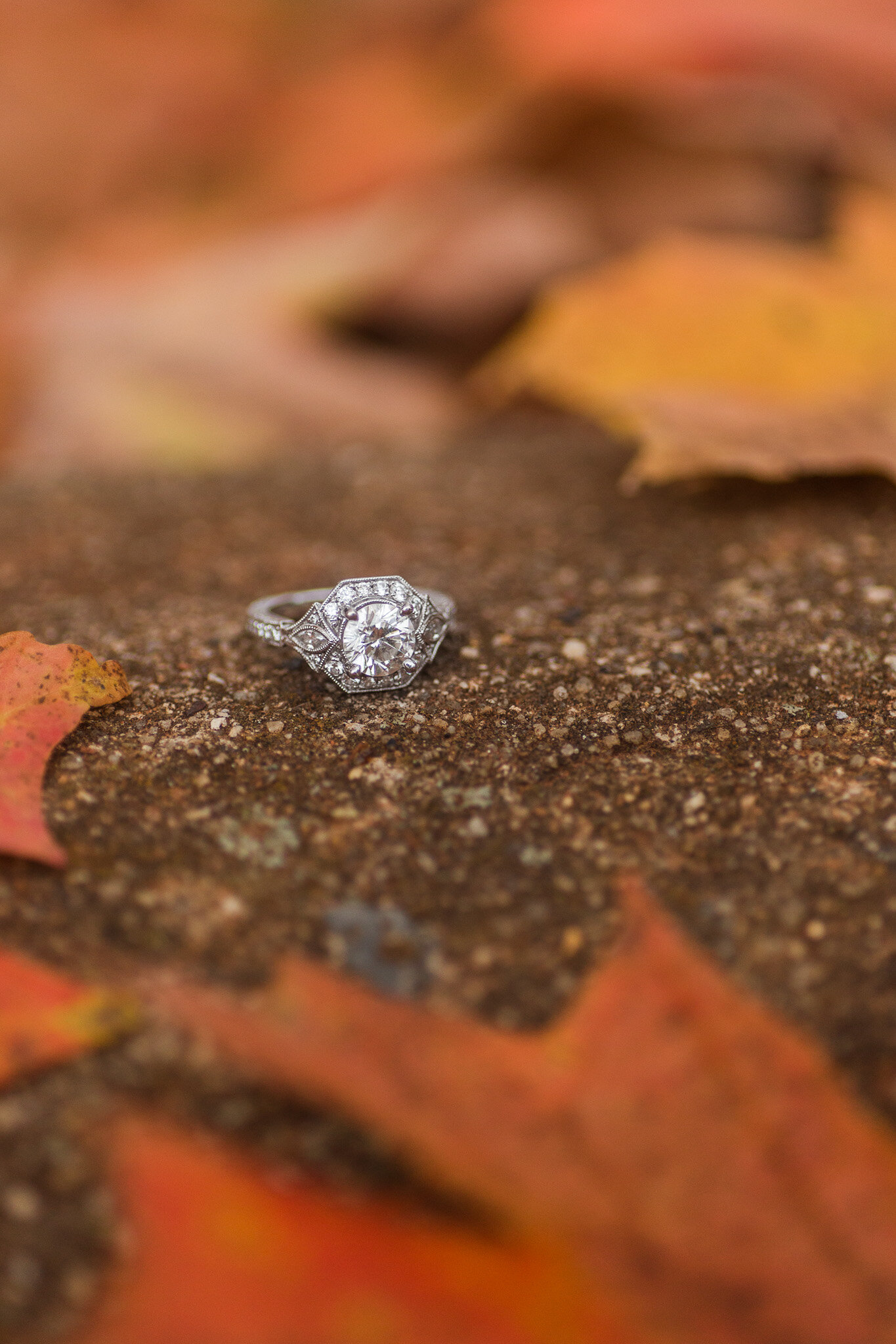 Brian and Emily Engagements-78.jpg