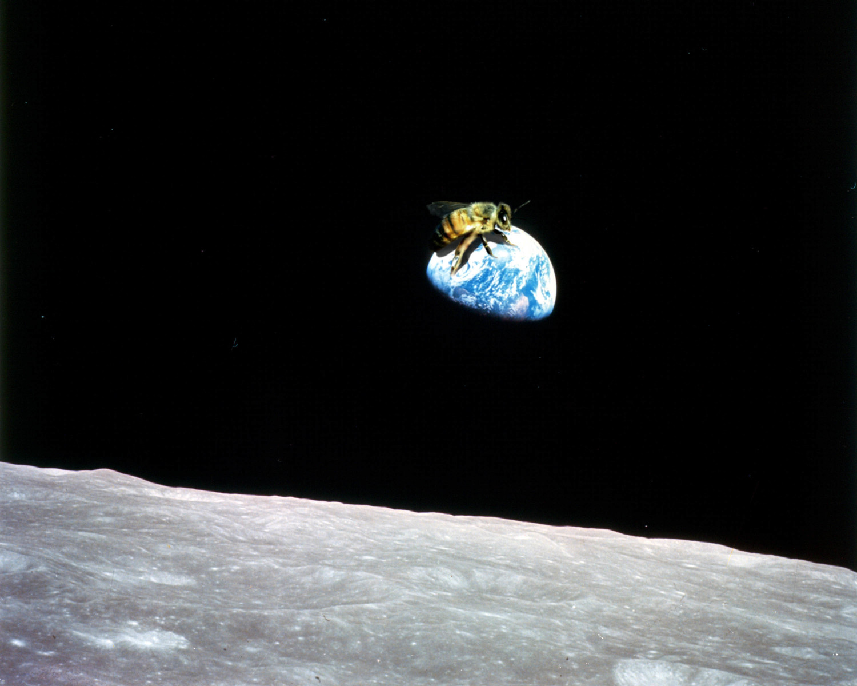 spacebeez.jpg
