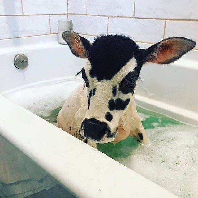 All the good ideas I ever had came to me while taking a bath 🧼 #mood #moood #mooood 🐄 via @visualpleasuremag and @gabbebe