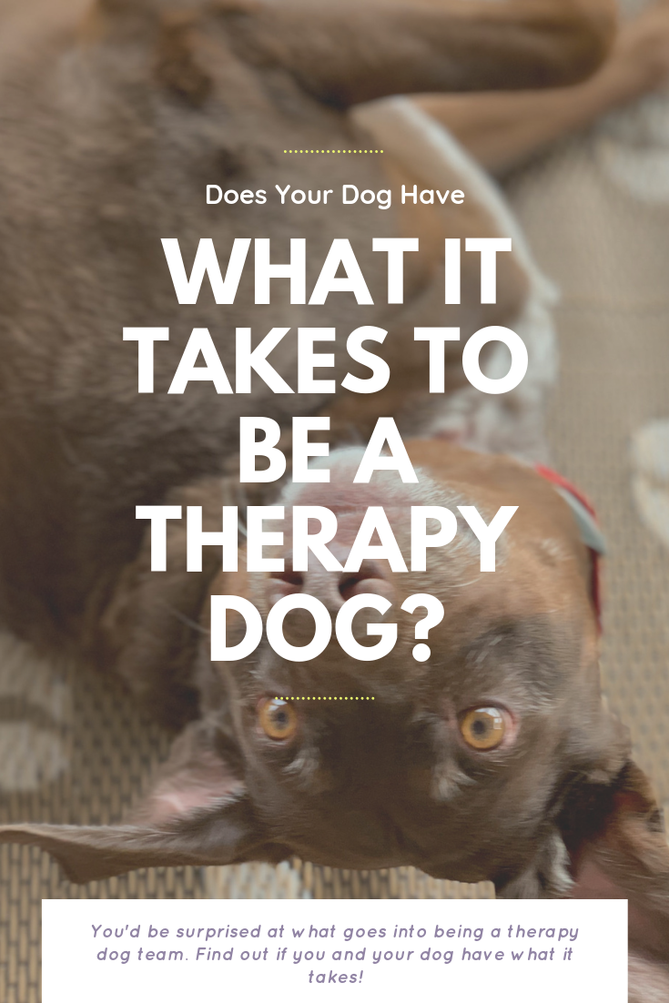 Does Your Dog Have What It Takes To Be A Therapy Dog? | Bring Mommy A Martini