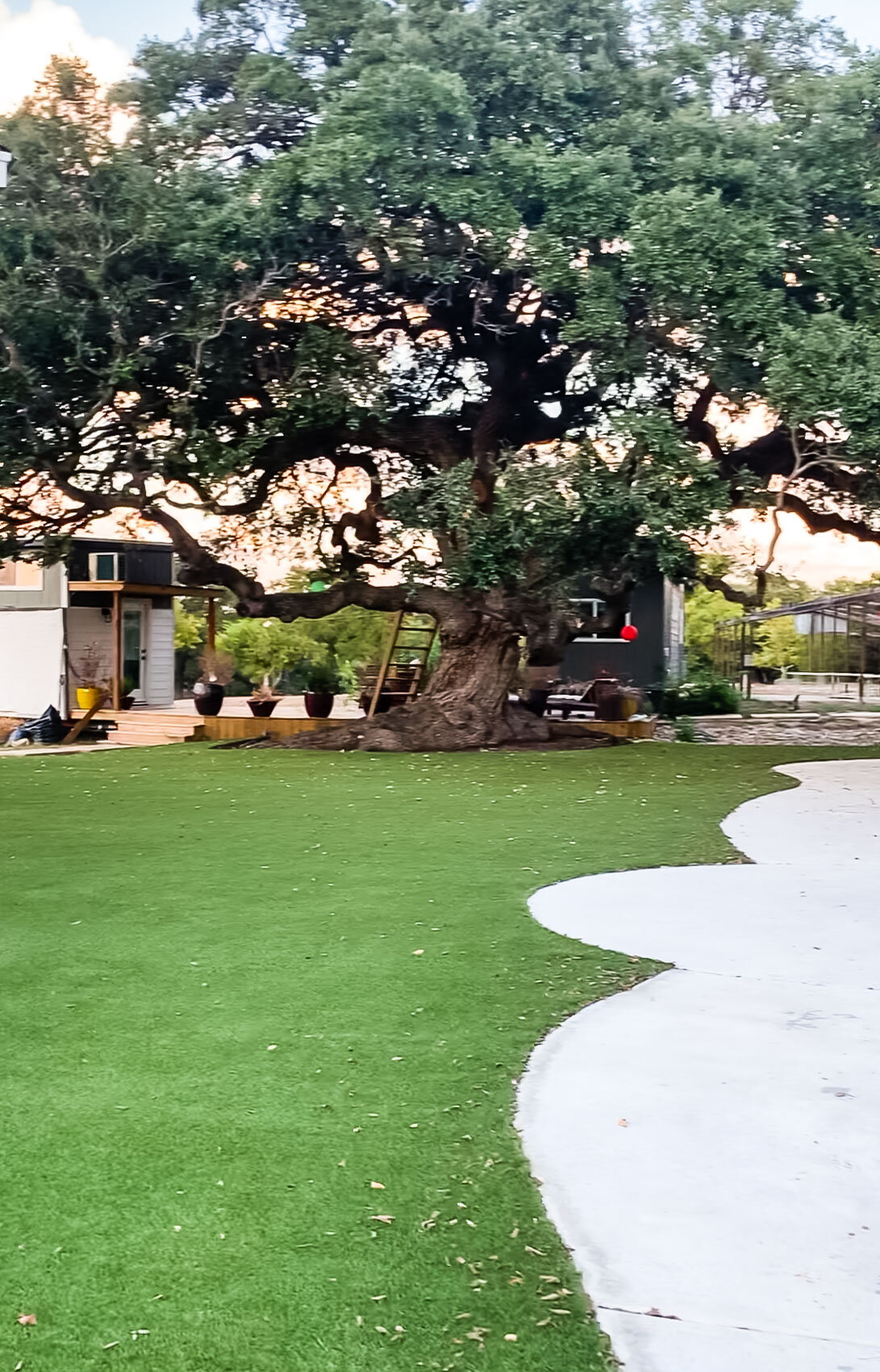 There's a sneak peek of the two tiny houses anchored by a Live Oak tree estimated at about 1,300 years old.