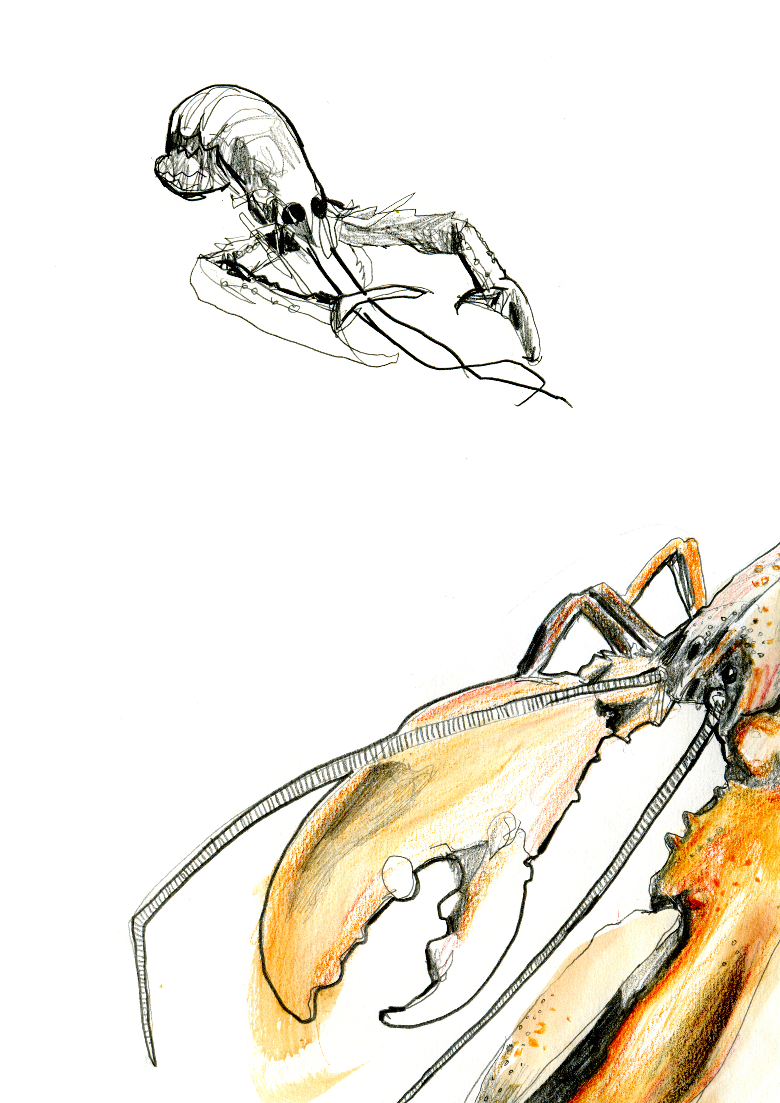 The Langoustine and the Lobster.jpg