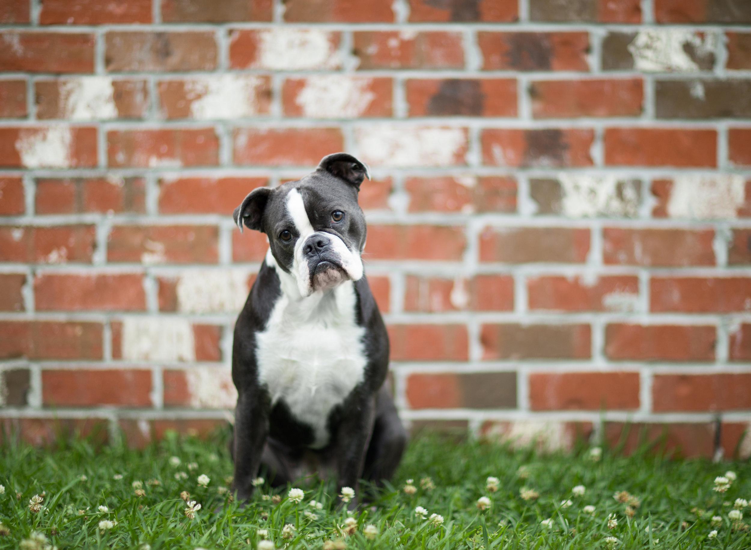 Shreveport Bossier Pet Photography