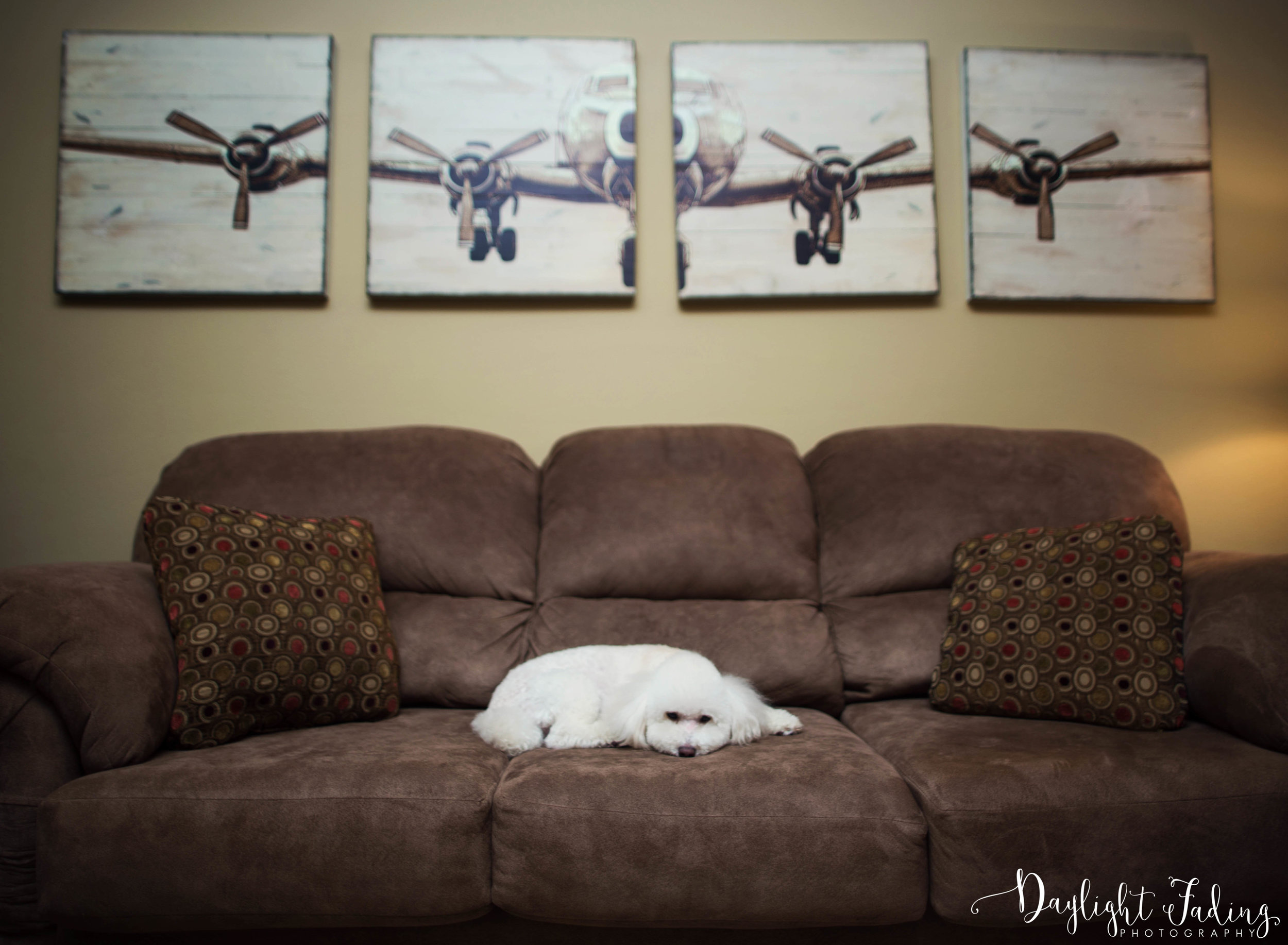 Shreveport & Bossier City Louisiana Dog Photographer