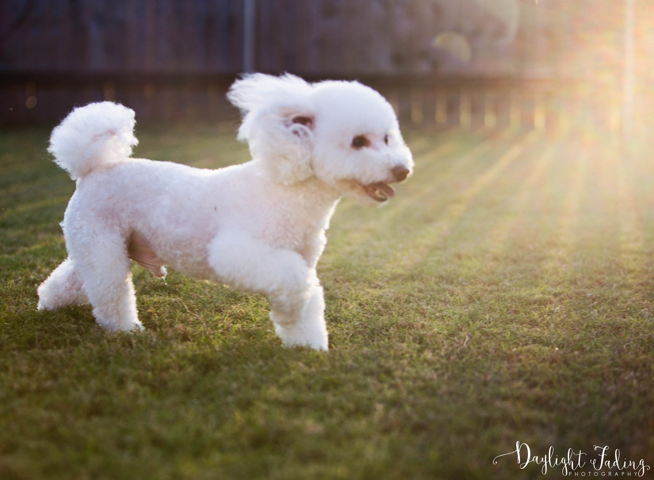 Shreveport & Bossier City Louisiana Dog Photographer