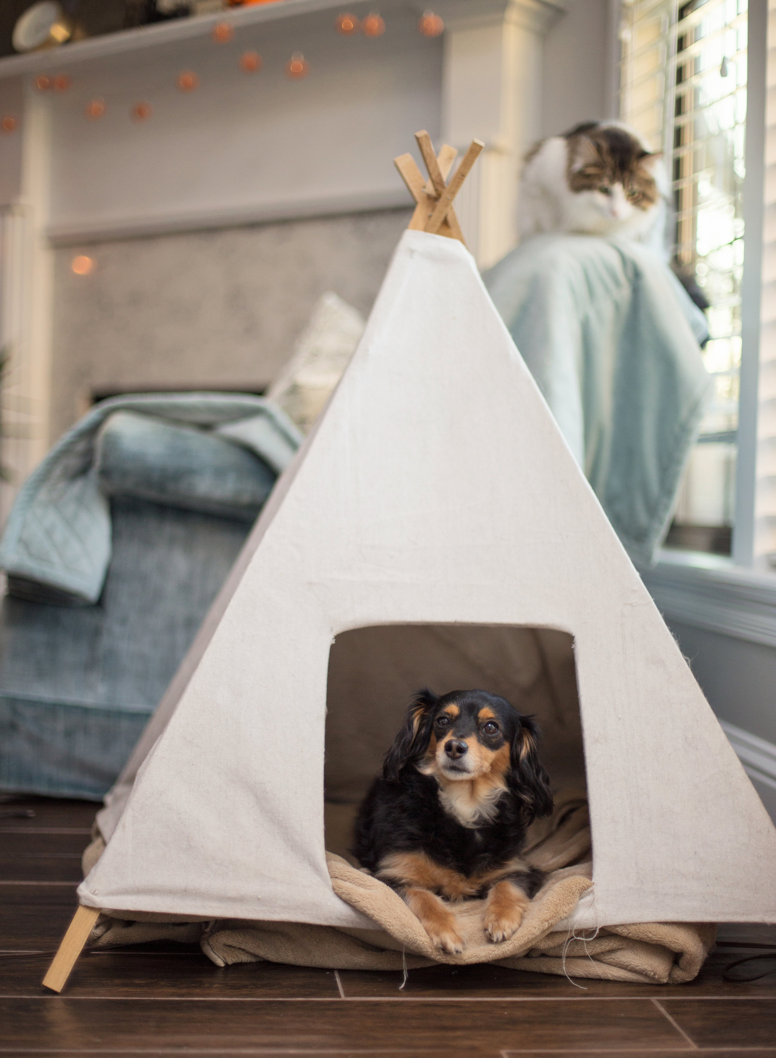 Daylight Fading Photography - Shreveport Bossier Louisiana Lifestyle Dog Photographer