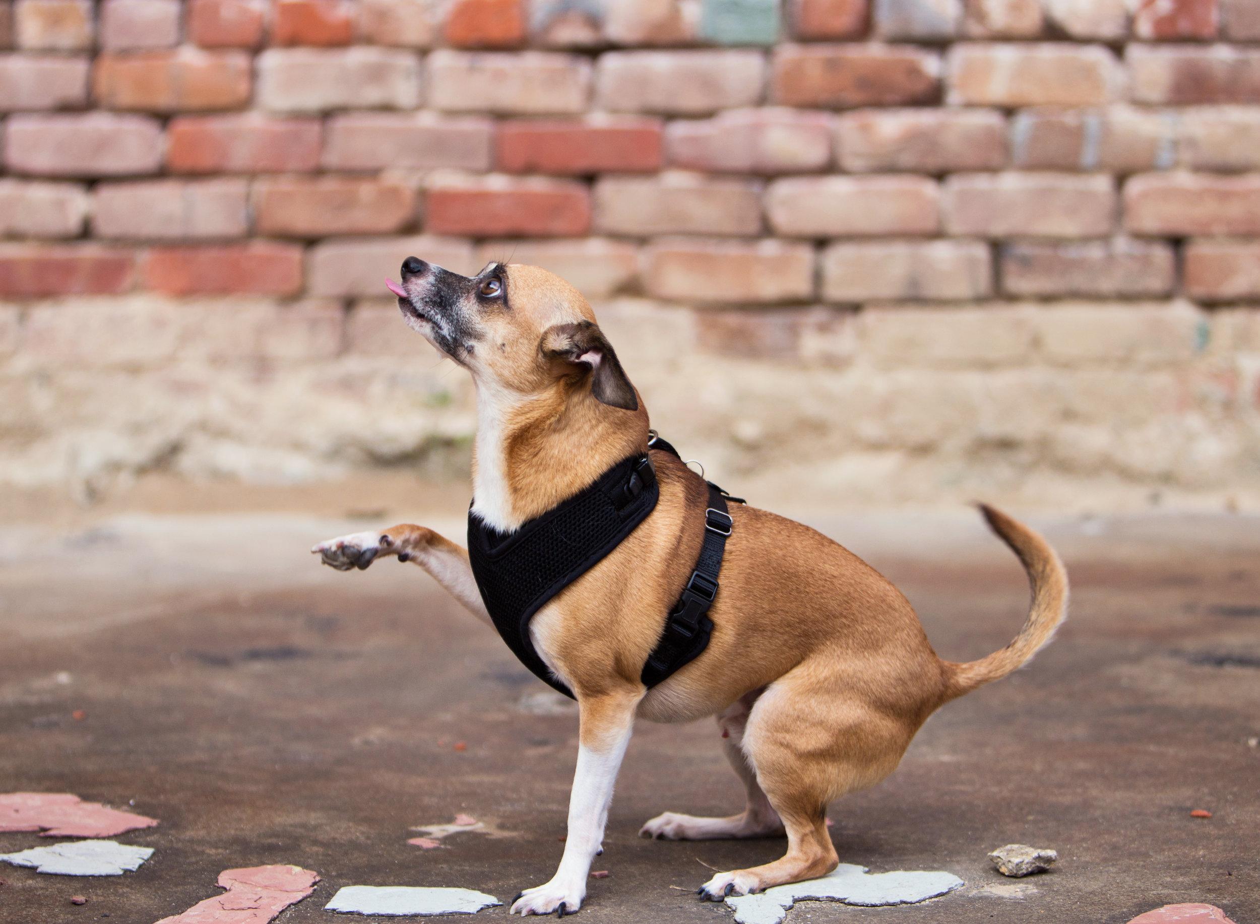 Shreveport Dog Photography