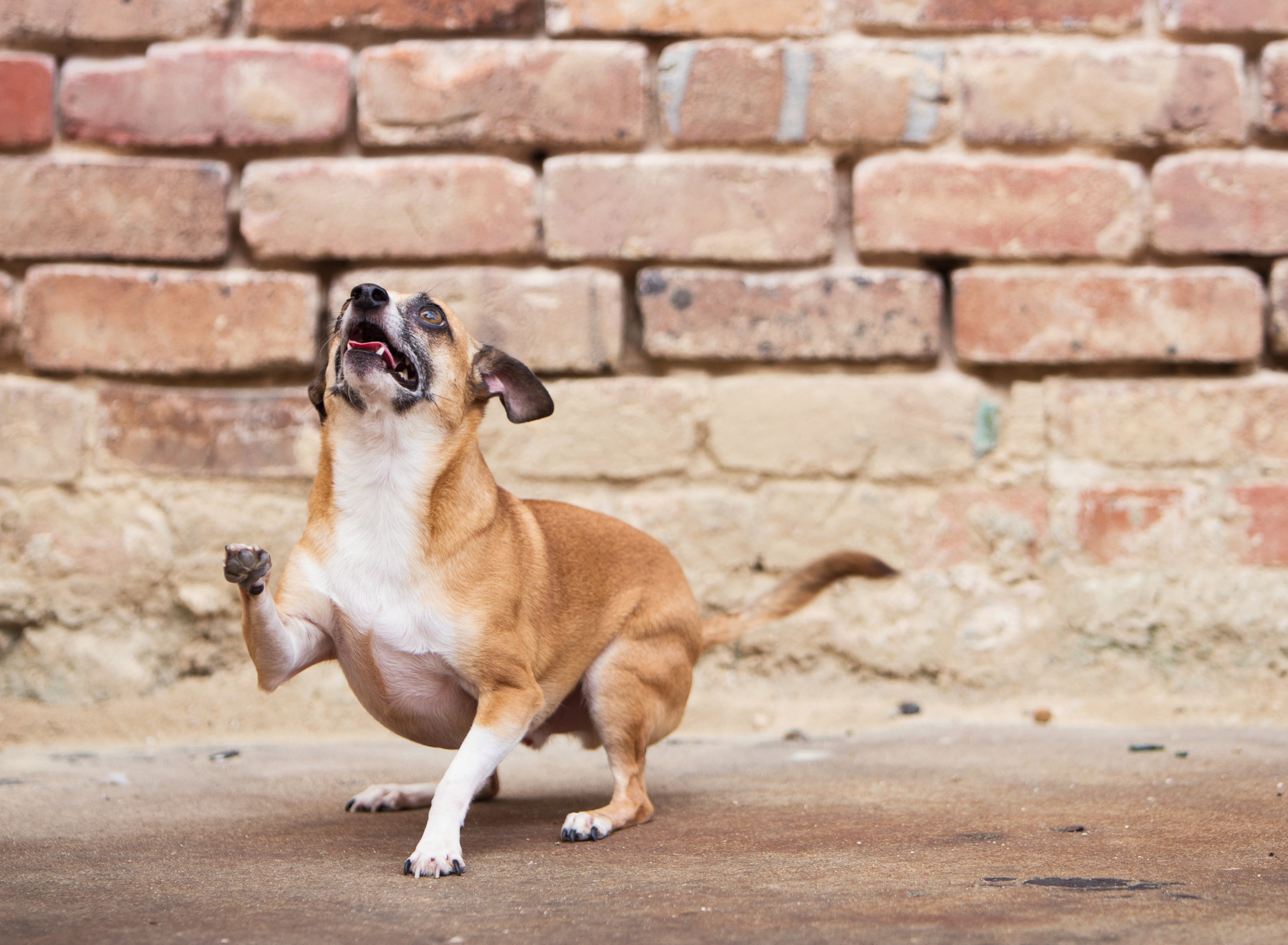 Downtown Shreveport Dog Portraits
