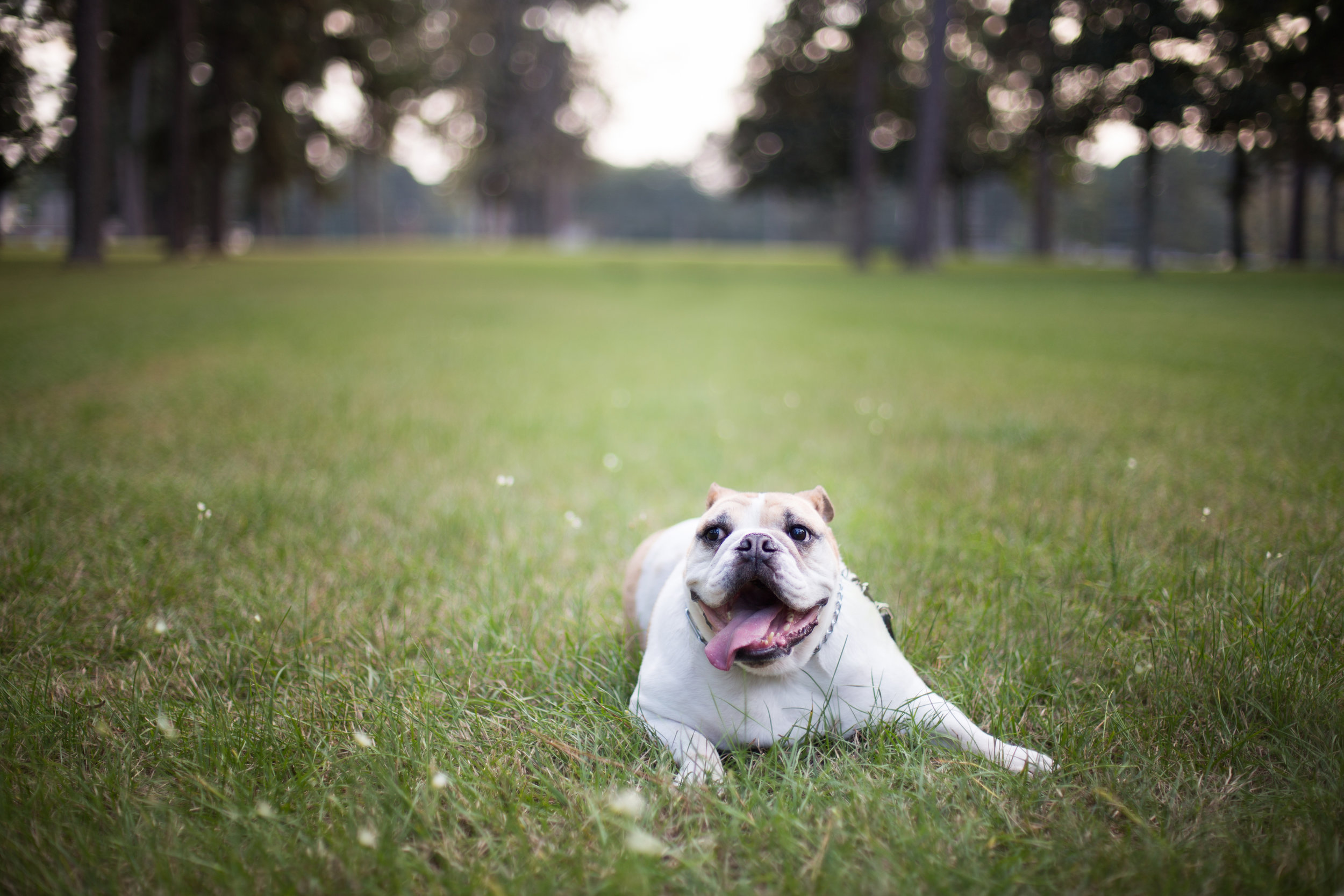 Pet Photography in Shreveport, Louisiana