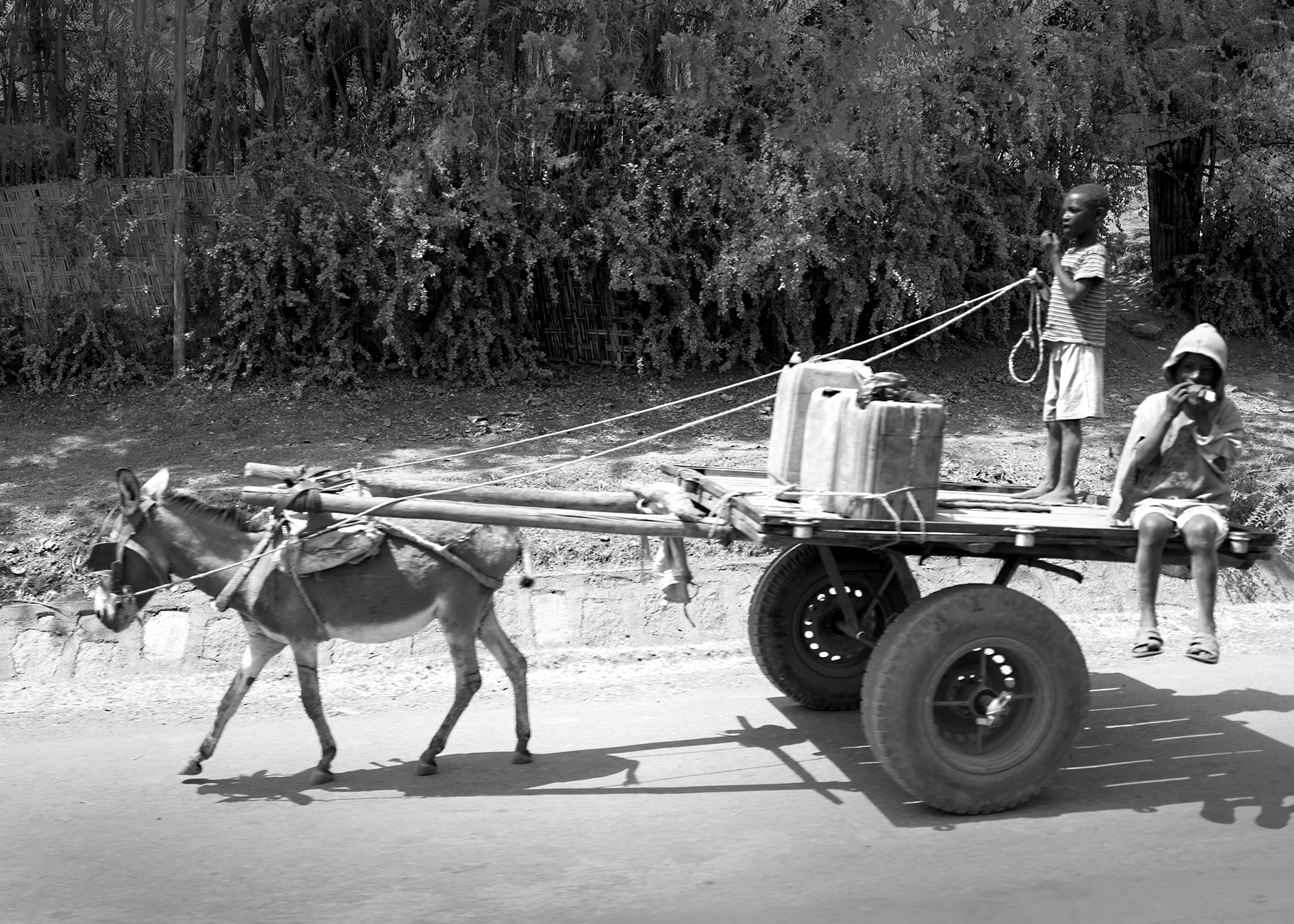 Passing through a village on the road from Addis to Awassa, boys driving a donkey-led cart,loaded with water containers.