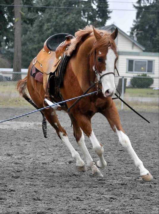 Training services include:    Horse Training starts at $350.00 per month.    Riding lessons start at $35.00 per hour.