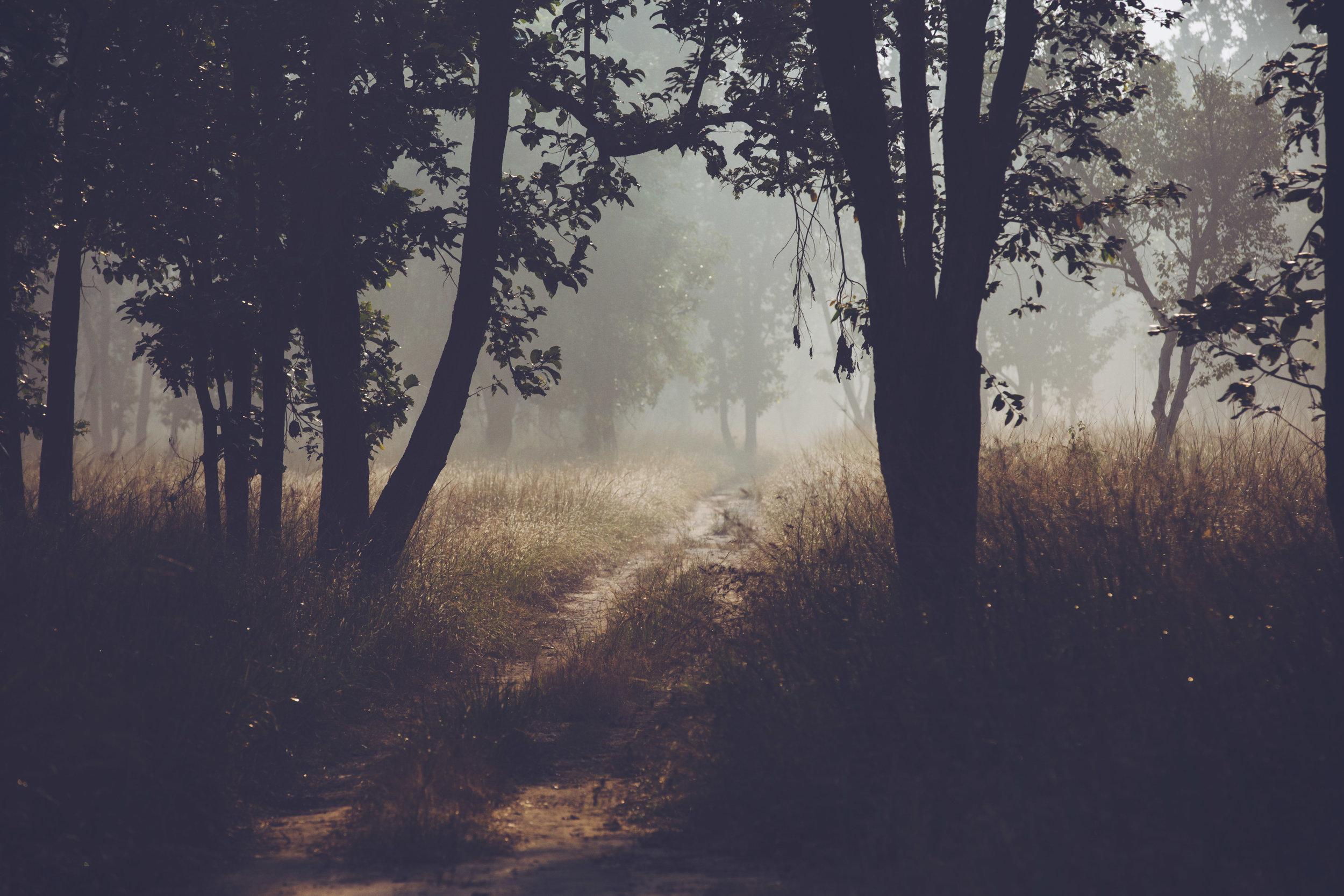 C_Lamb-0940.jpg