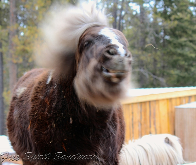 buddy hair mar 19.jpg