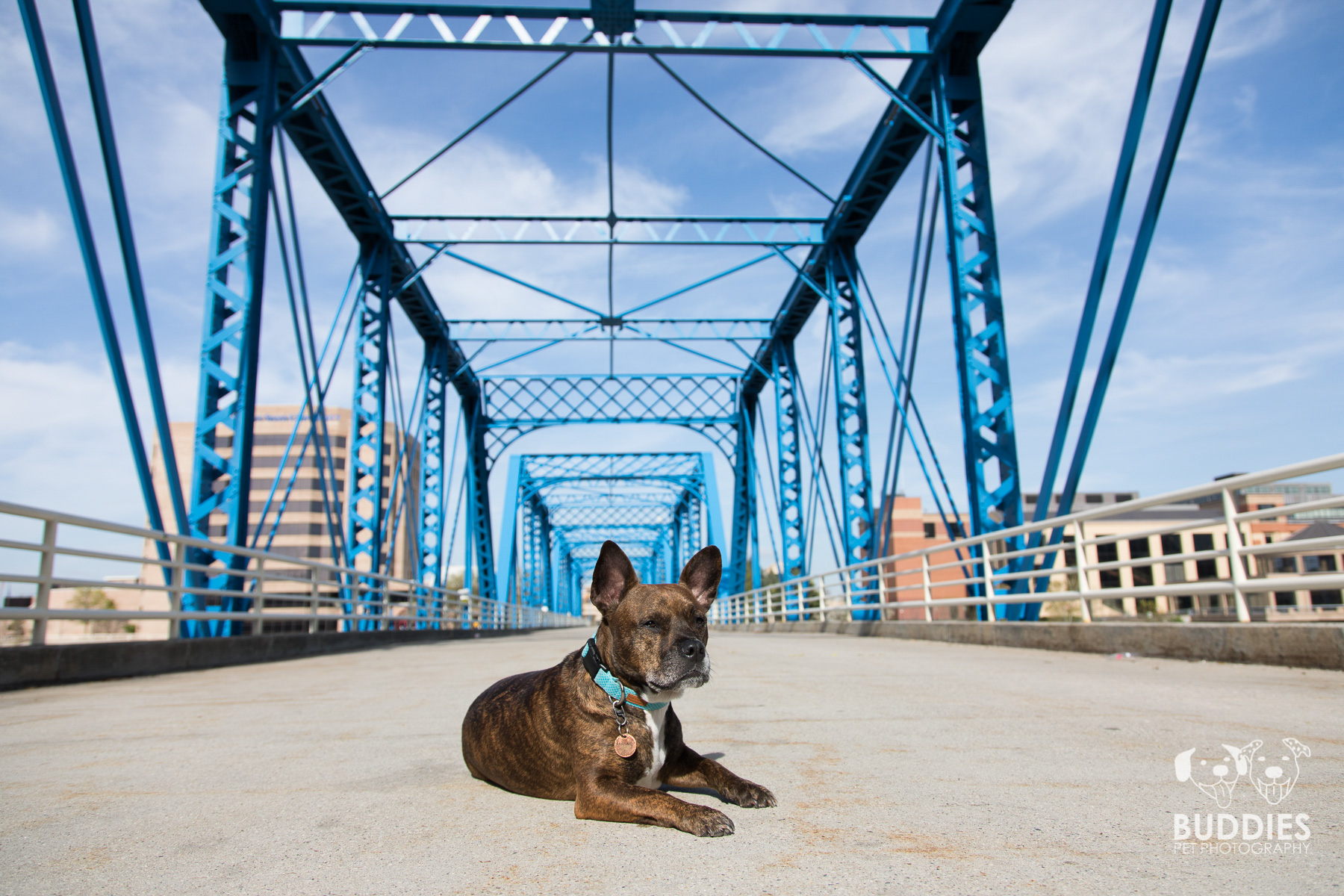 Urban Blue Bridge Grand Rapids, MI Pet Photography