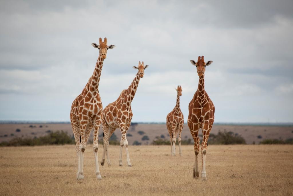 Solio Lodge Wildlife (19).jpg