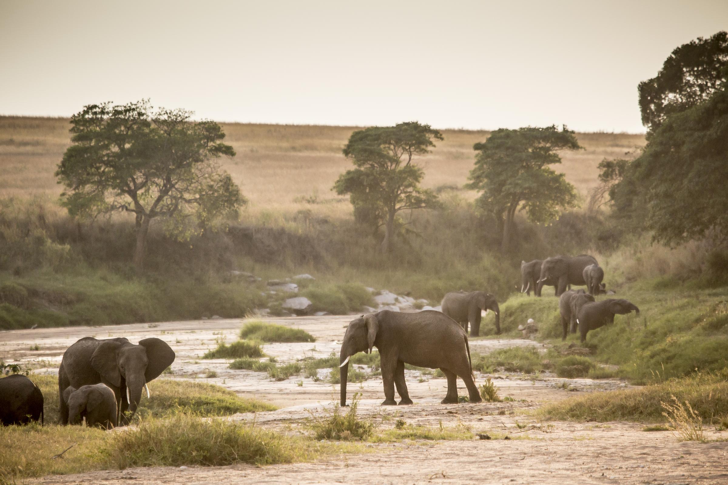 Elephants on the Sand river.jpg